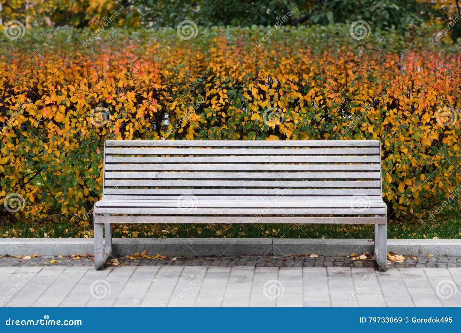 White Bench In The Park. Autumn Scene Still Life. Colorful