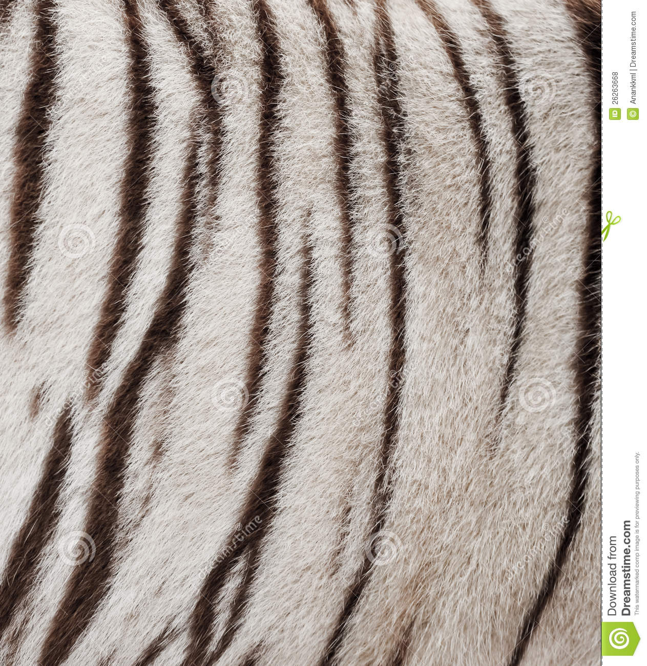 White Bengal Tiger Fur Stock Photo Image Of Hunting