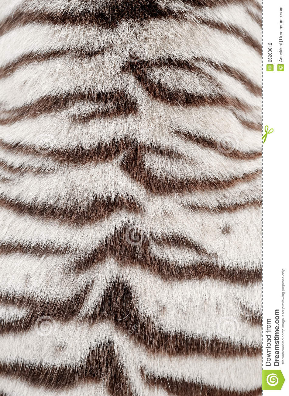 White Bengal Tiger Fur Stock Photo Image Of Style