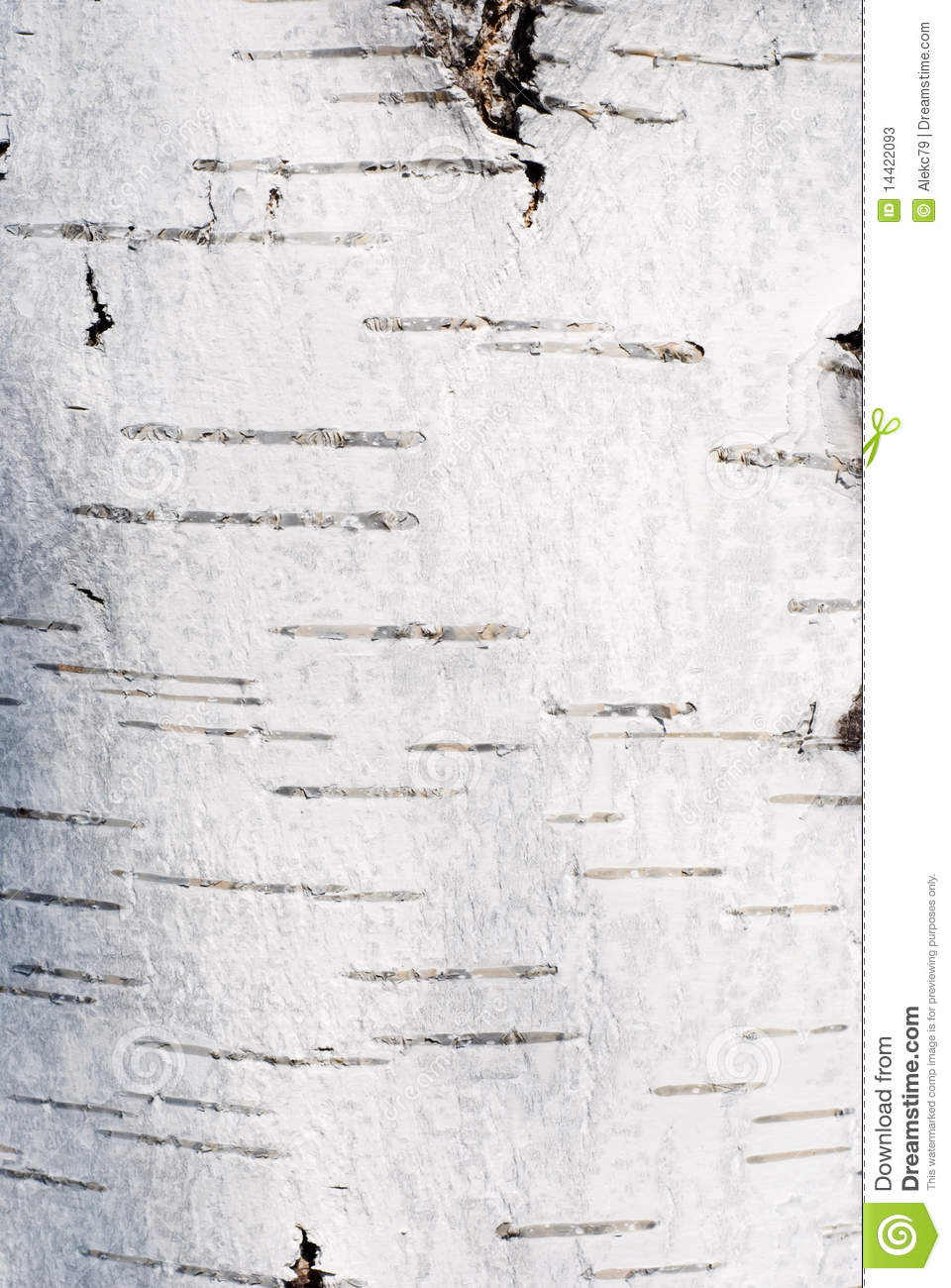 White Birch Texture Stock Photos - Image: 14422093
