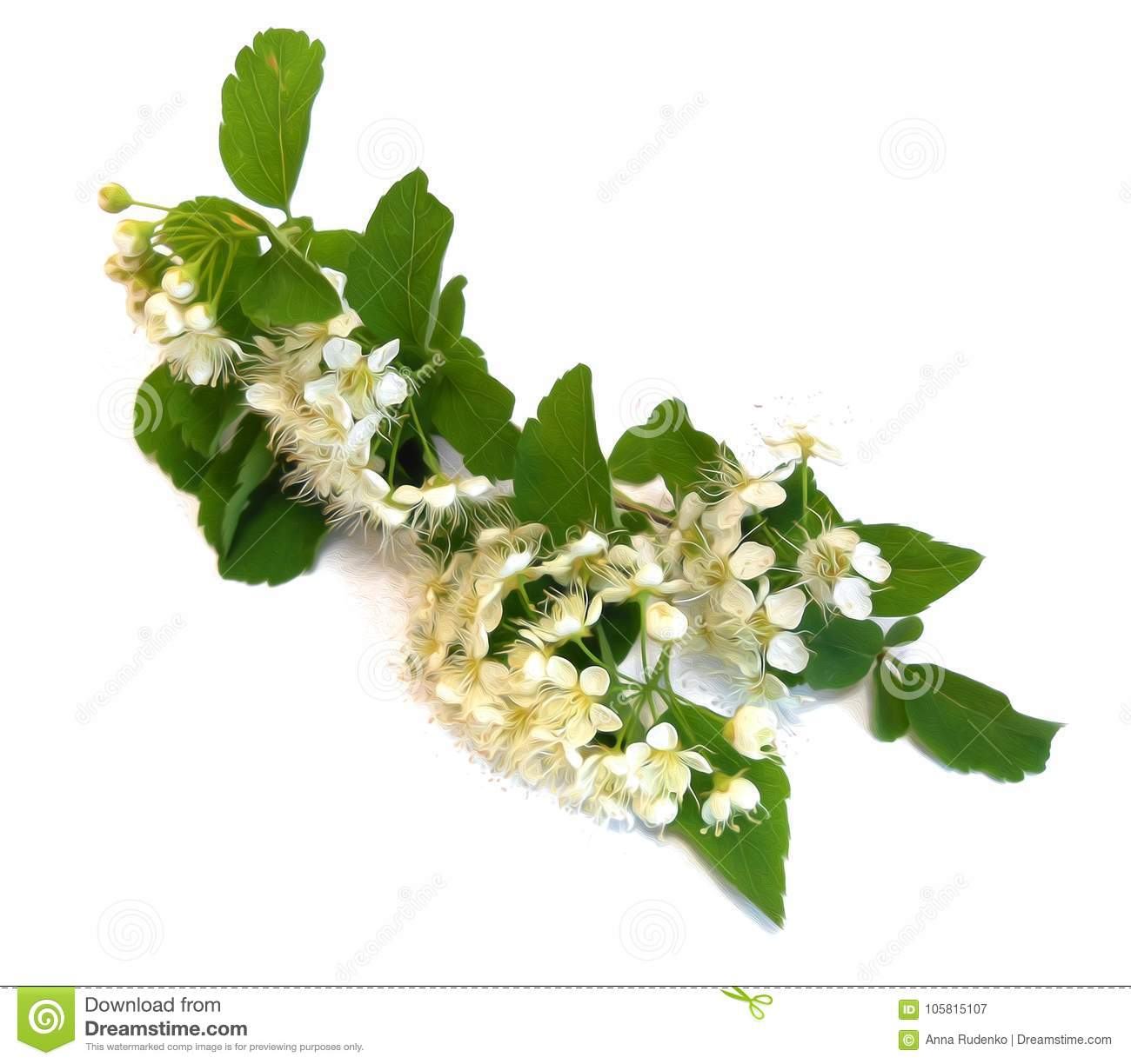 White Bird Cherry Branch Isolated Flower Photo Manipulation