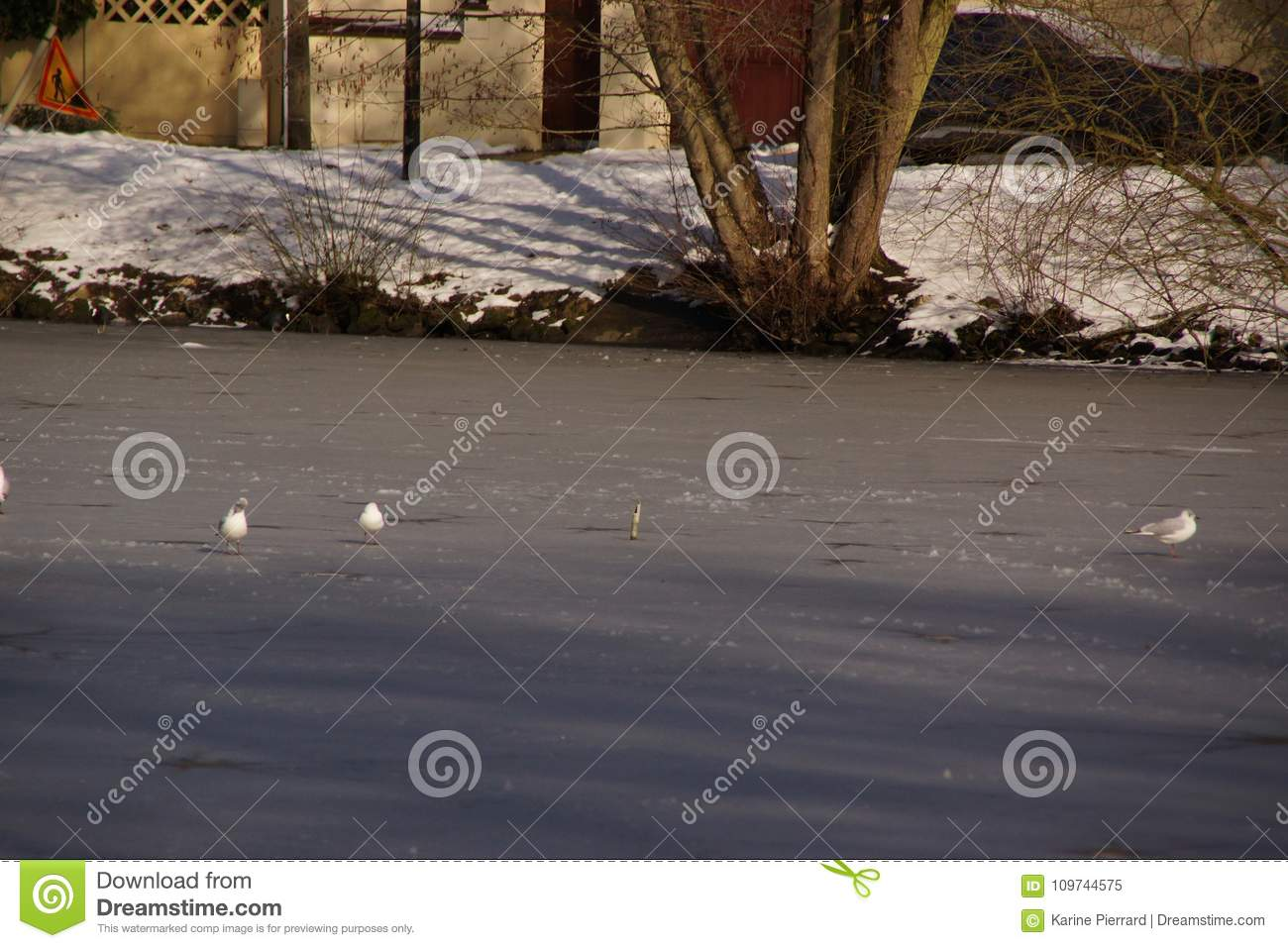 White birds - Pond of the Mute in the city of Elancourt in France