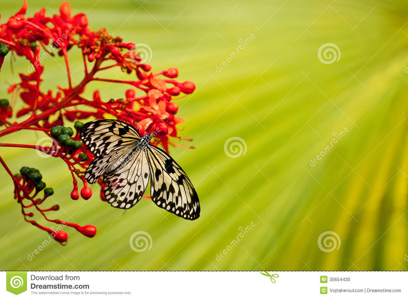 white black butterfly on red flower with green background stock photo image 35654430. Black Bedroom Furniture Sets. Home Design Ideas