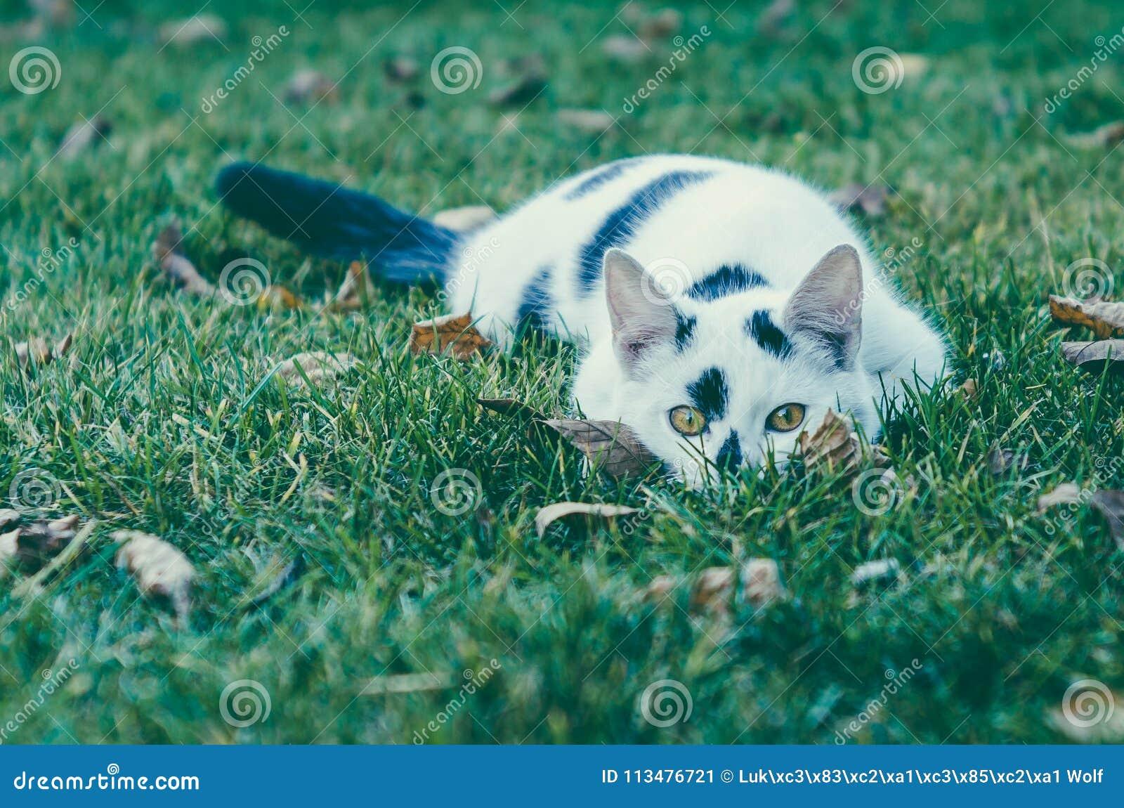 WHITE-BLACK CAT Riconar, 55mm, alte Linse f2,2
