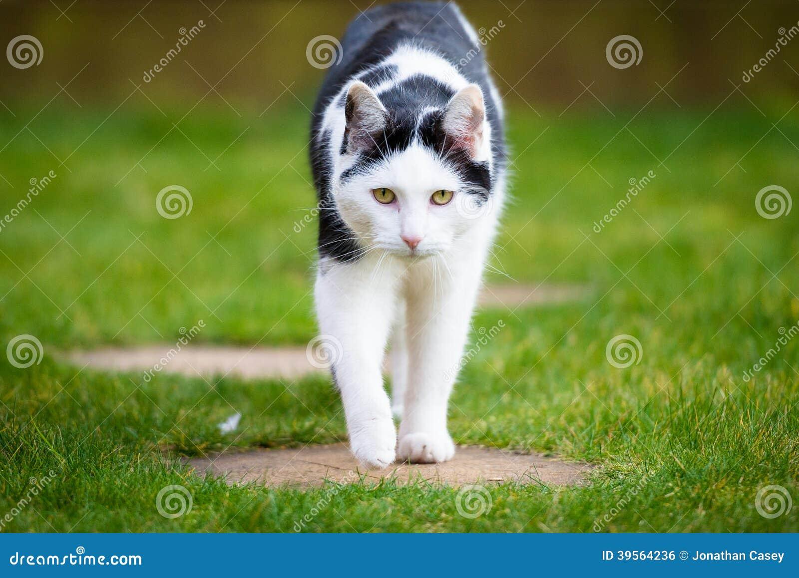 Black Bandit Cat