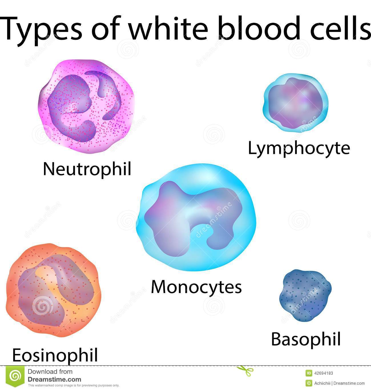 White Blood Cells Stock Illustration - Image: 42694183