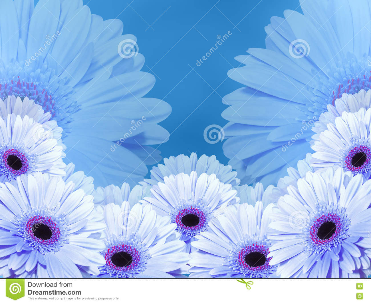 White Blue Flowers On Blue Blurred Background Closeup Collage Of