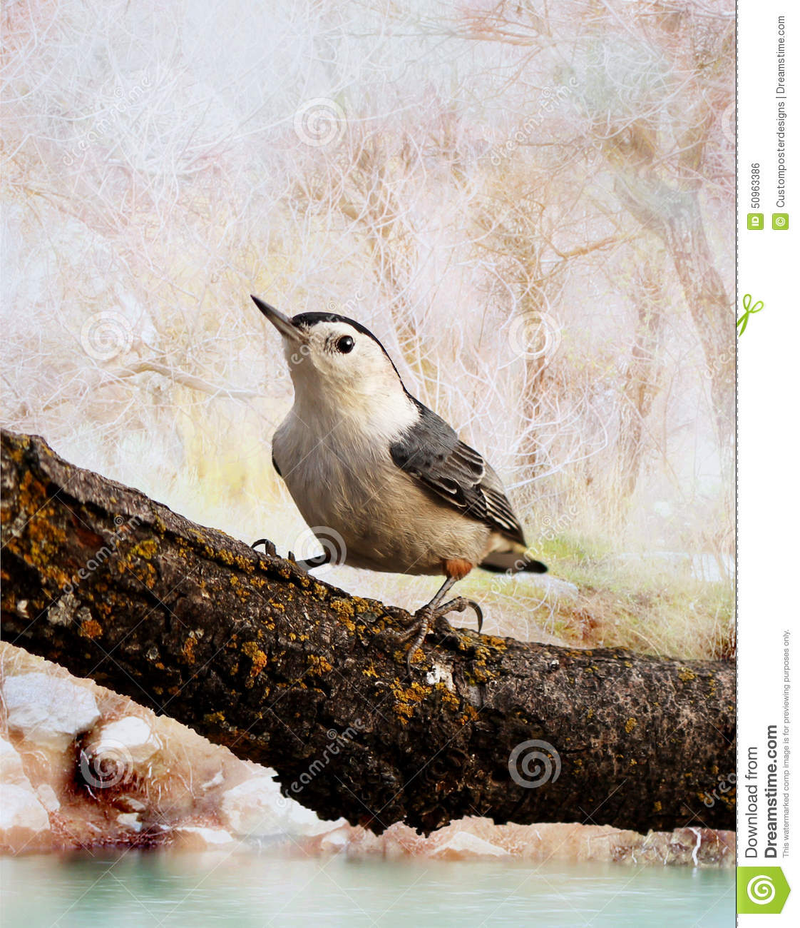 Download A white breasted nuthatch. stock photo. Image of watching - 50963386