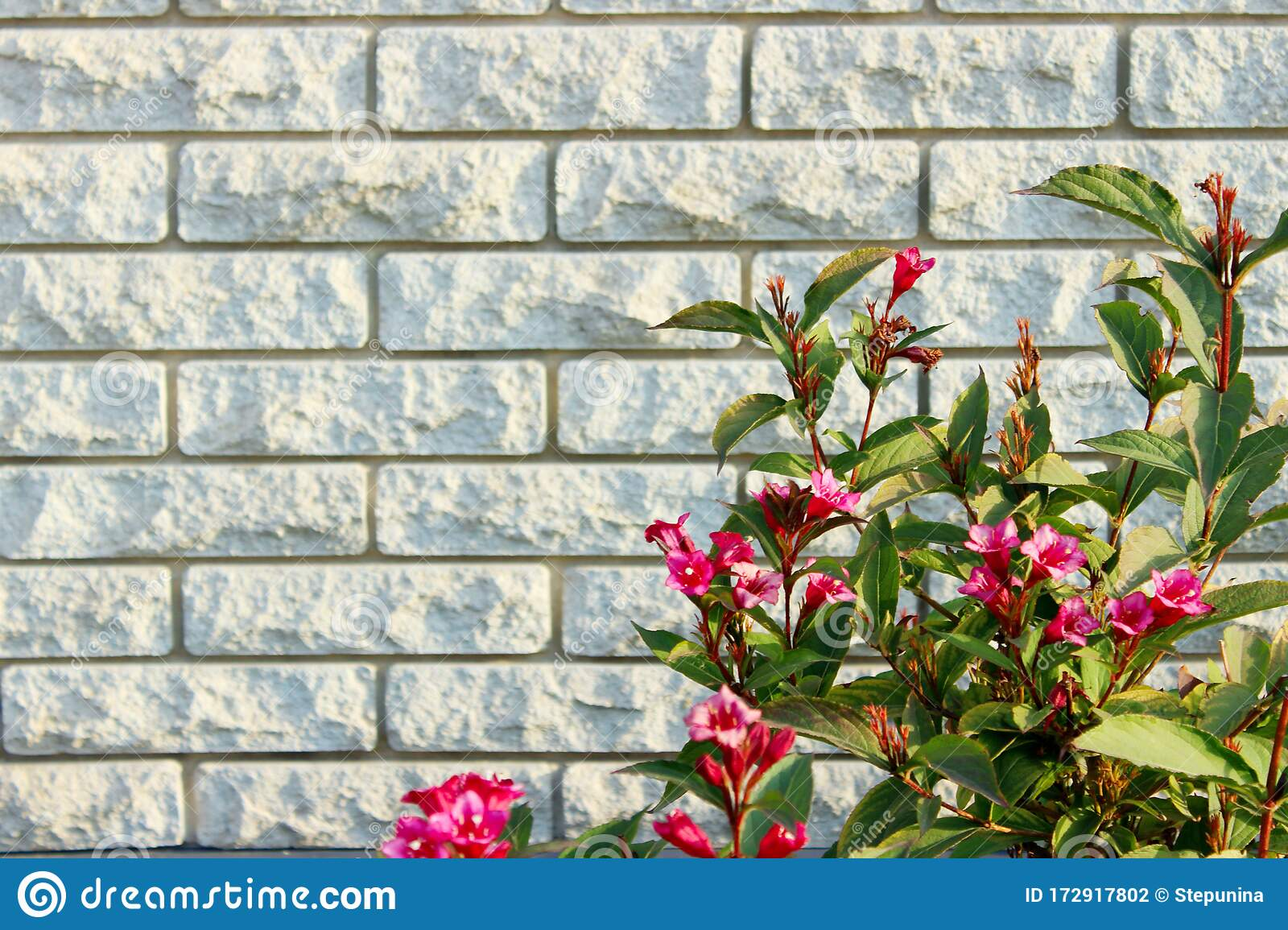 White Brick Fence And Bright Red Flowers Brick Wall Texture Background Stock Photo Image Of Exterior Bush 172917802