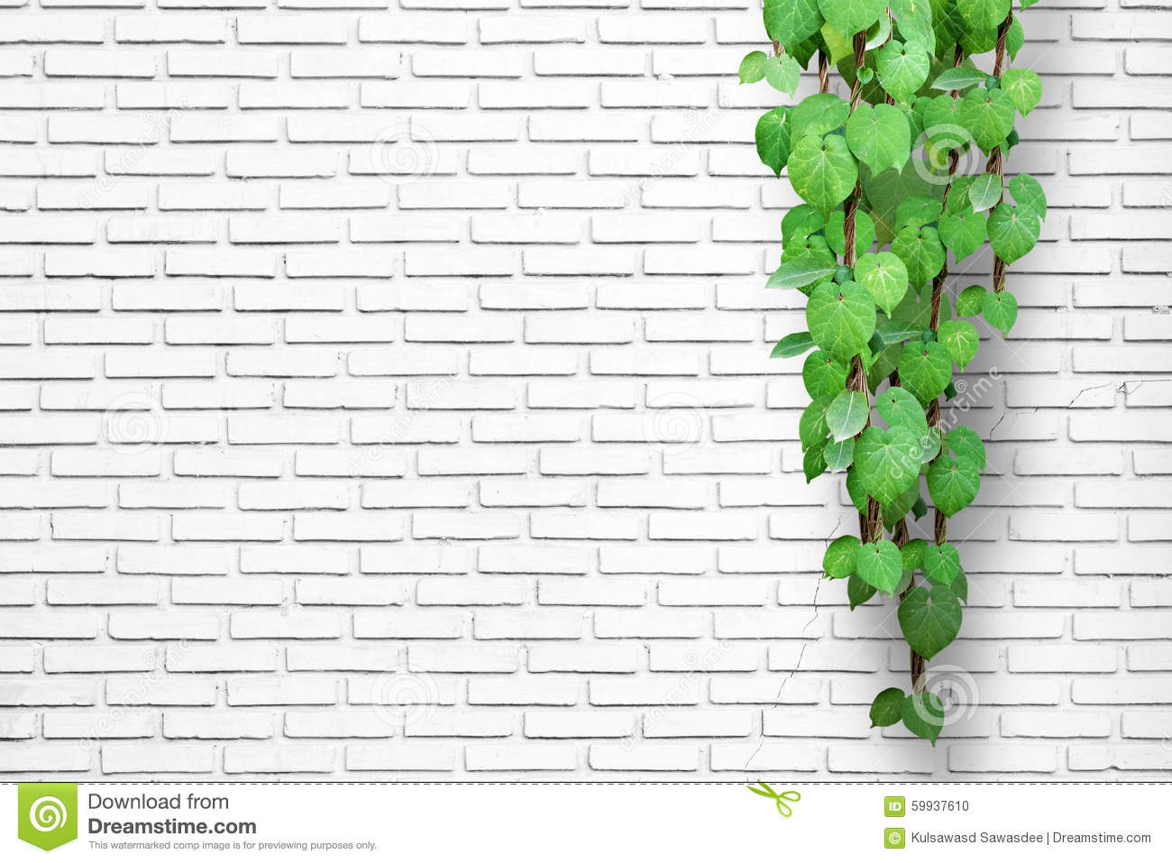 White Brick Wall Background With Creeping Plant Stock Photo Image Of Plate Architecture 59937610