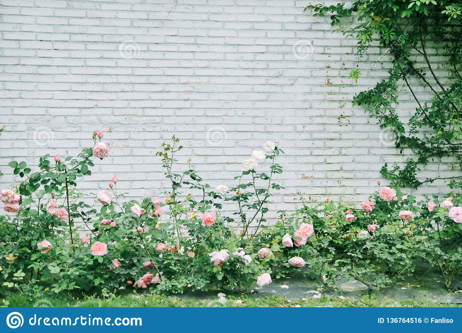 White Brick Wall With Some Roses Seamless Photo Texture Stock Photo Image Of Flowers Aged 136764516