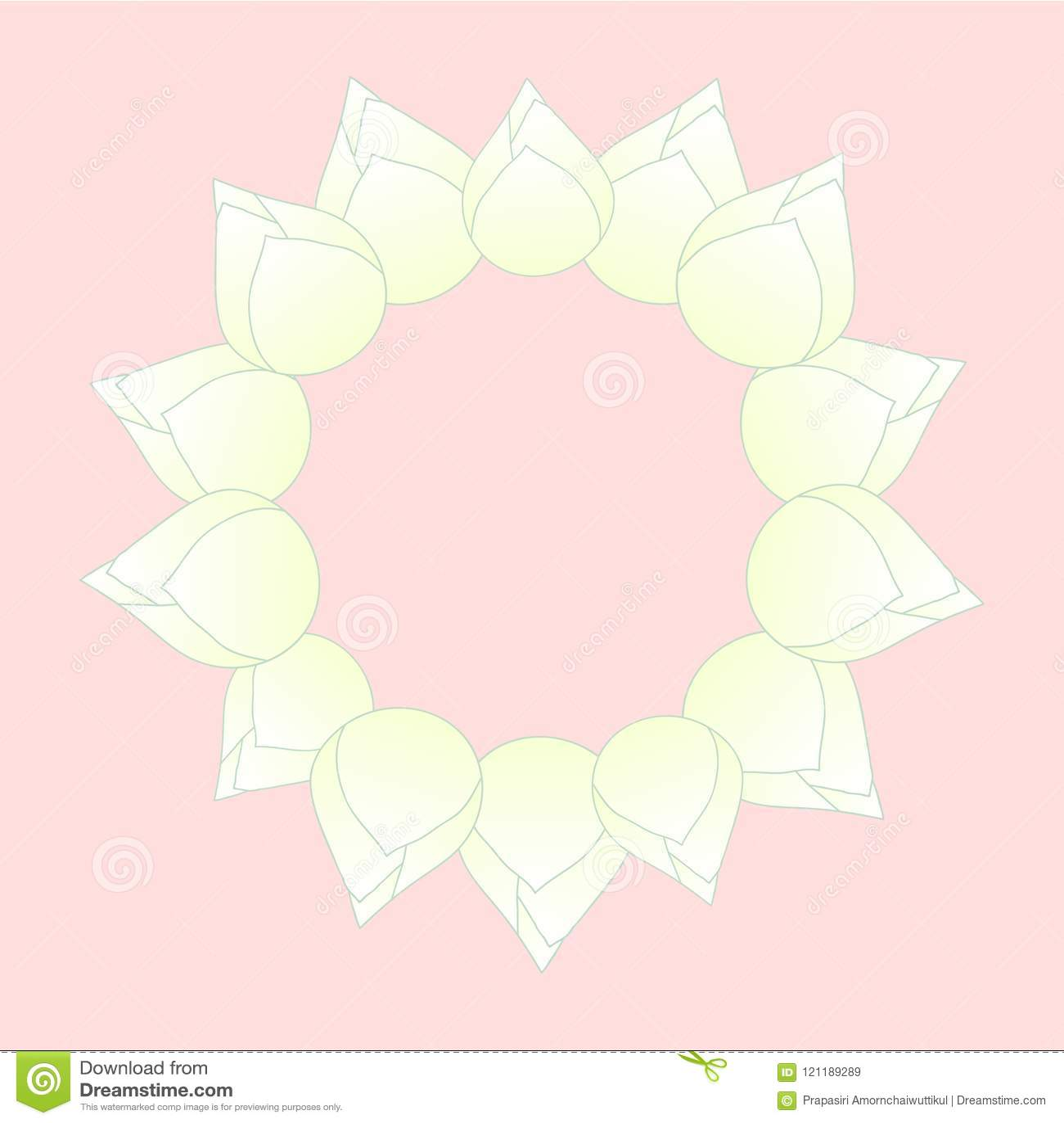 White bud indian lotus wreath nelumbo nuciferasacred lotus bean white bud indian lotus wreath nelumbo nuciferasacred lotus bean of india mightylinksfo