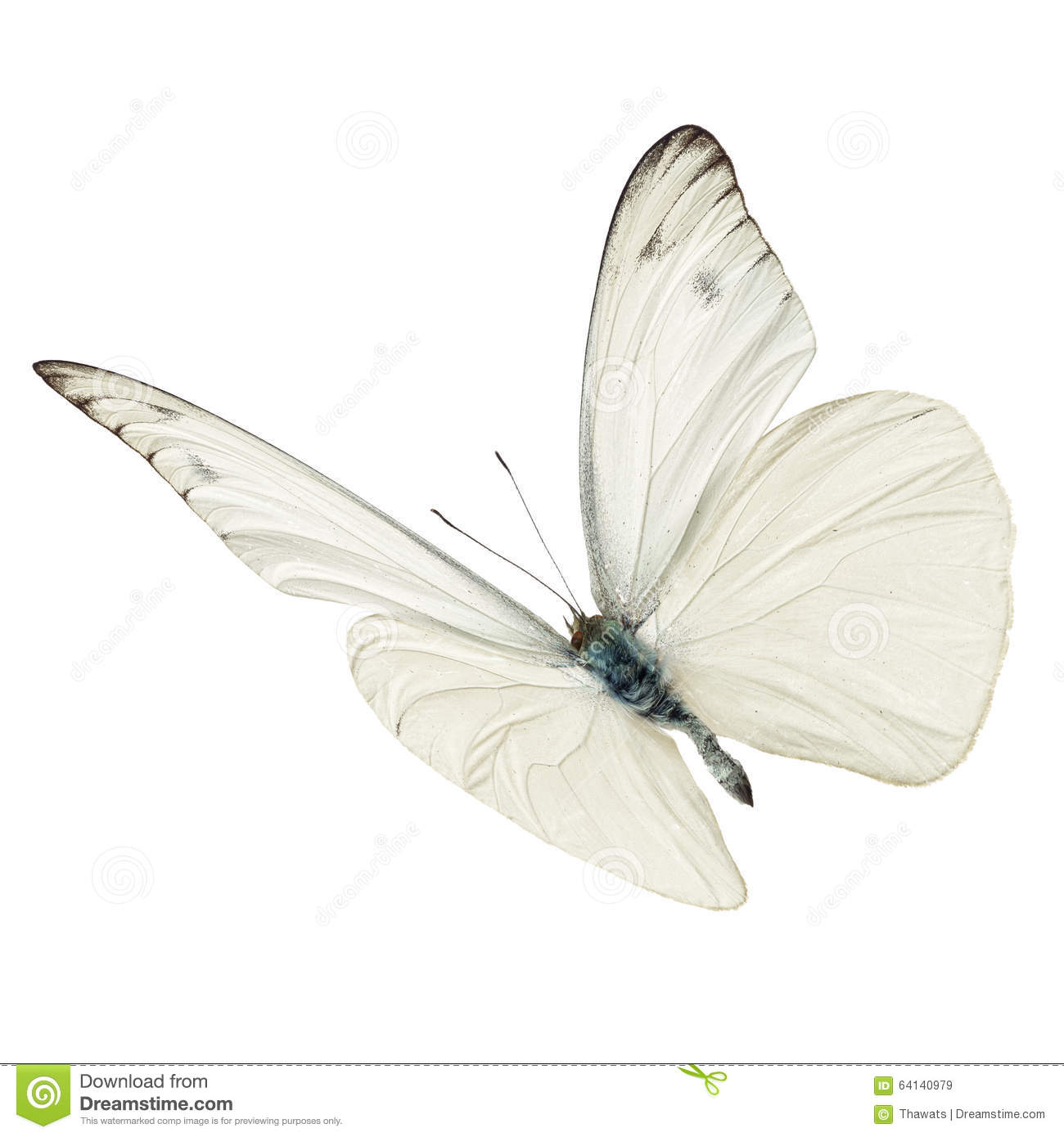 Beautiful white butterfly flying isolated on white background.