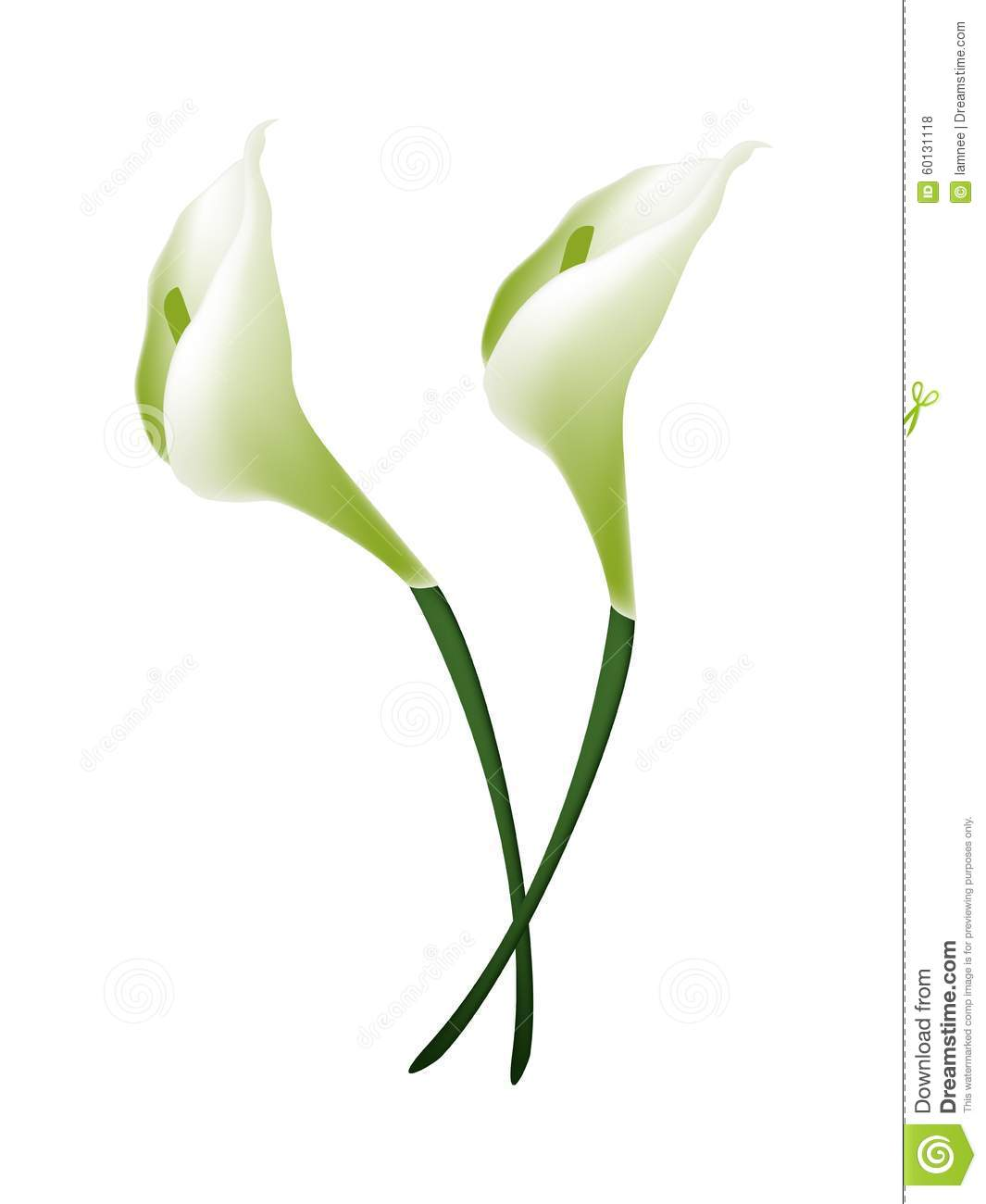 White calla lily flowers or white arum lily blossoms stock vector white calla lily flowers or white arum lily blossoms izmirmasajfo