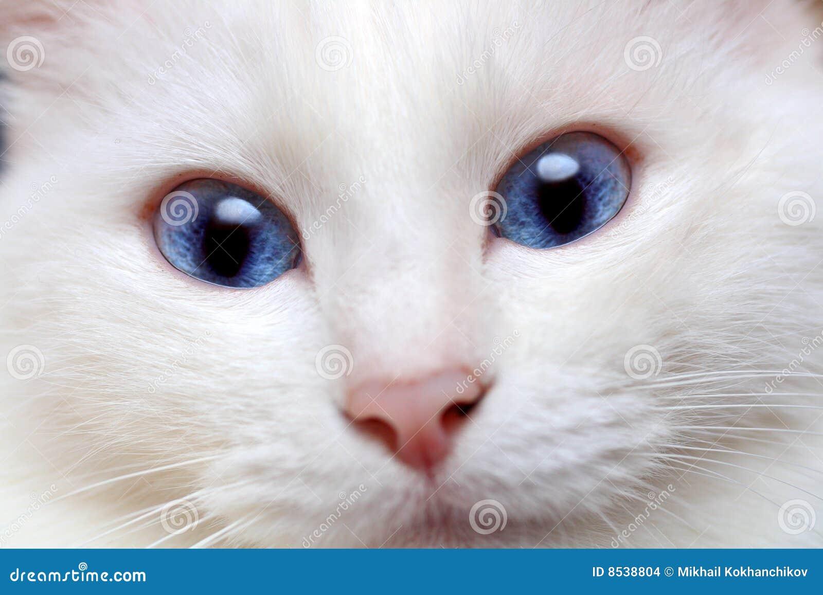 Blue Eye Cat Name