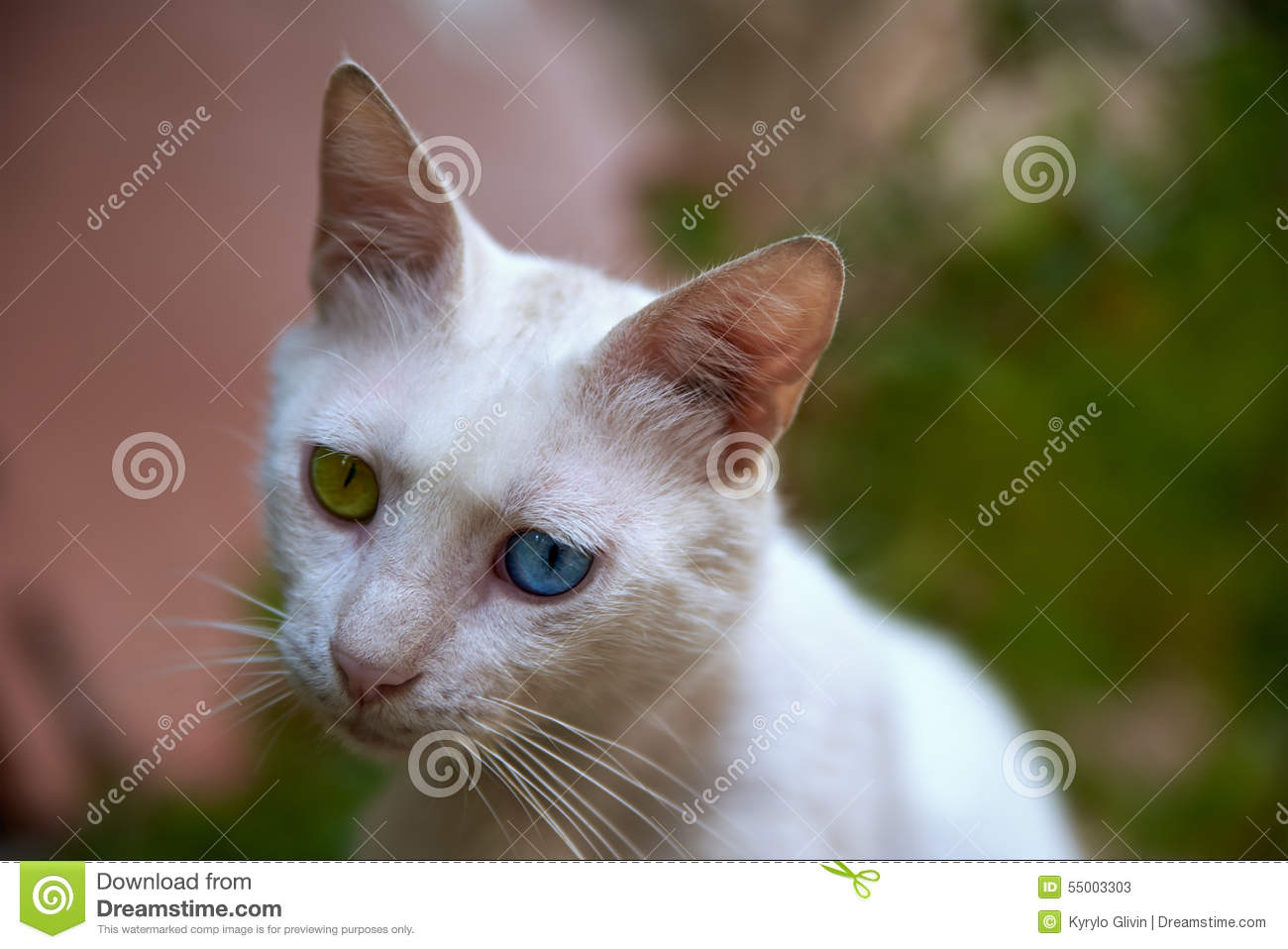 White Cat With Blue And Green Eyes Stock Image - Image ... White Kitten With Blue And Green Eyes