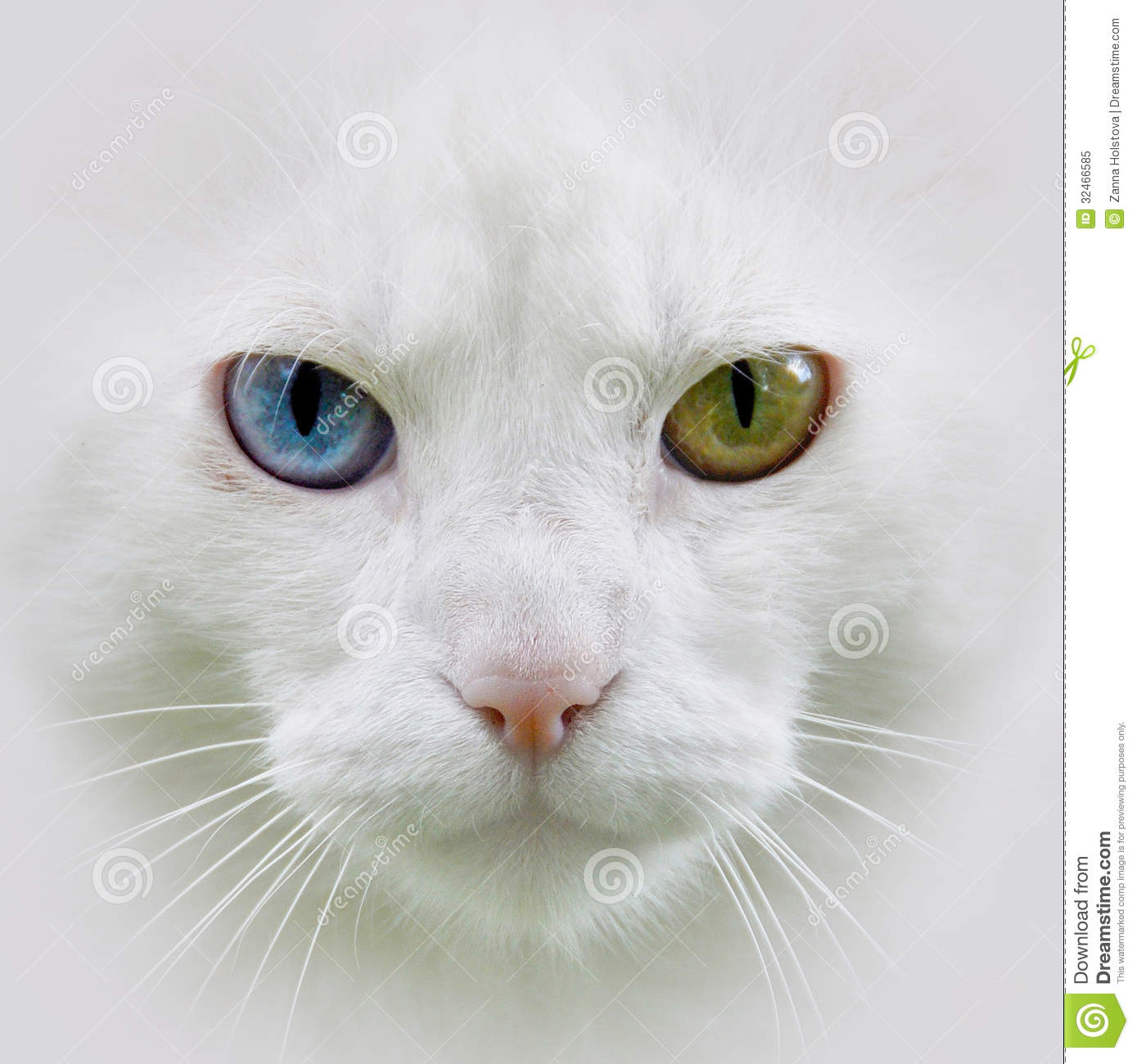 Dirty Nose White Cat