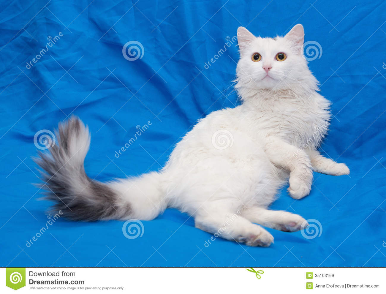 White Cat With Gray Tail And Yellow Eyes Royalty Free Stock
