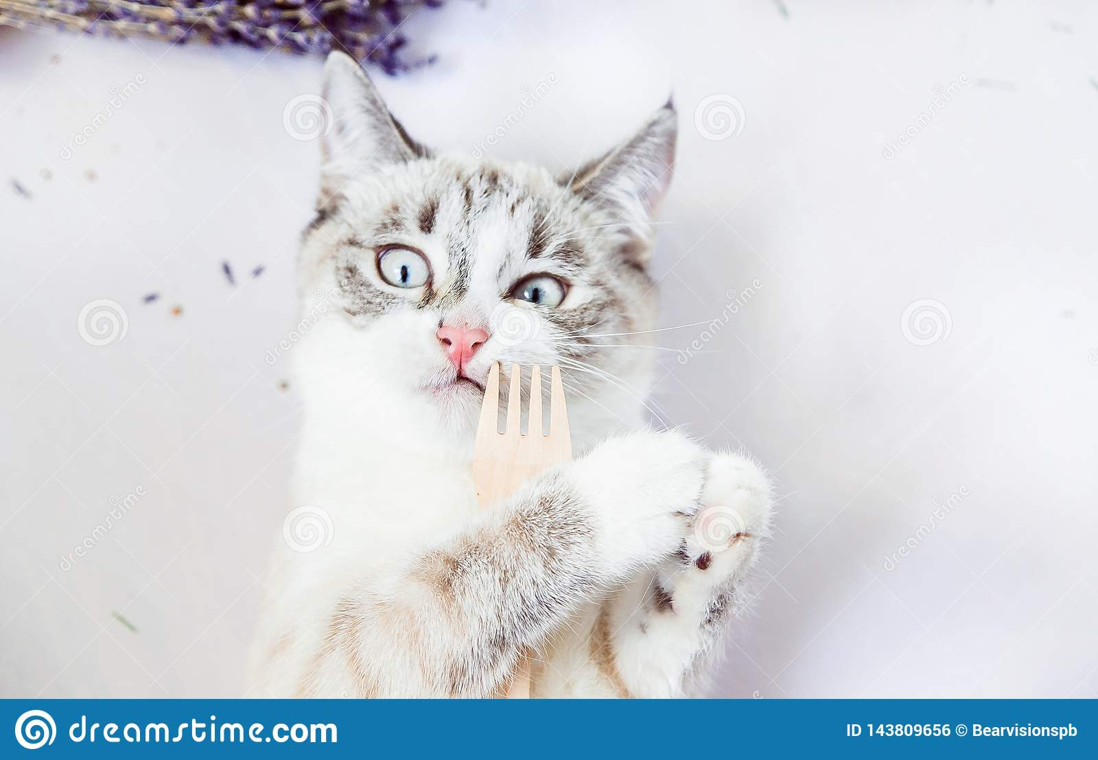 White Cat Holds In Paws An Eco Wooden Fork With Funny Face ...