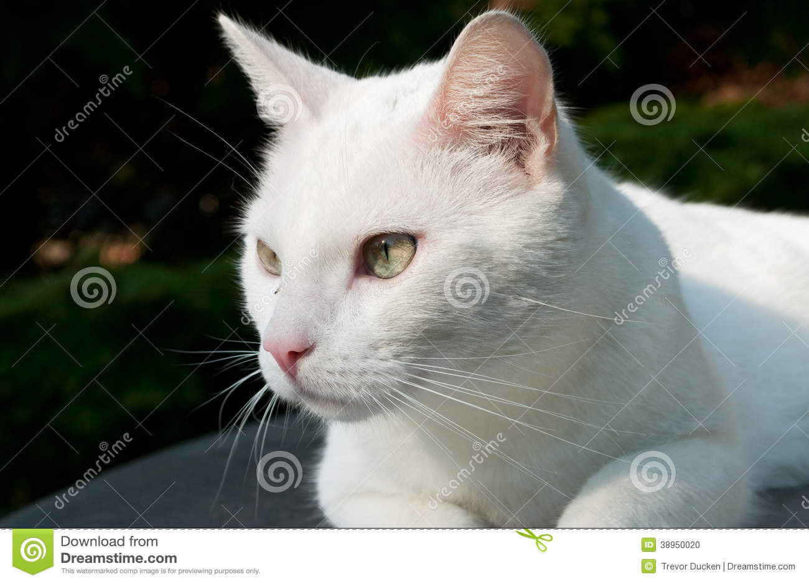 homemade cat scratching post