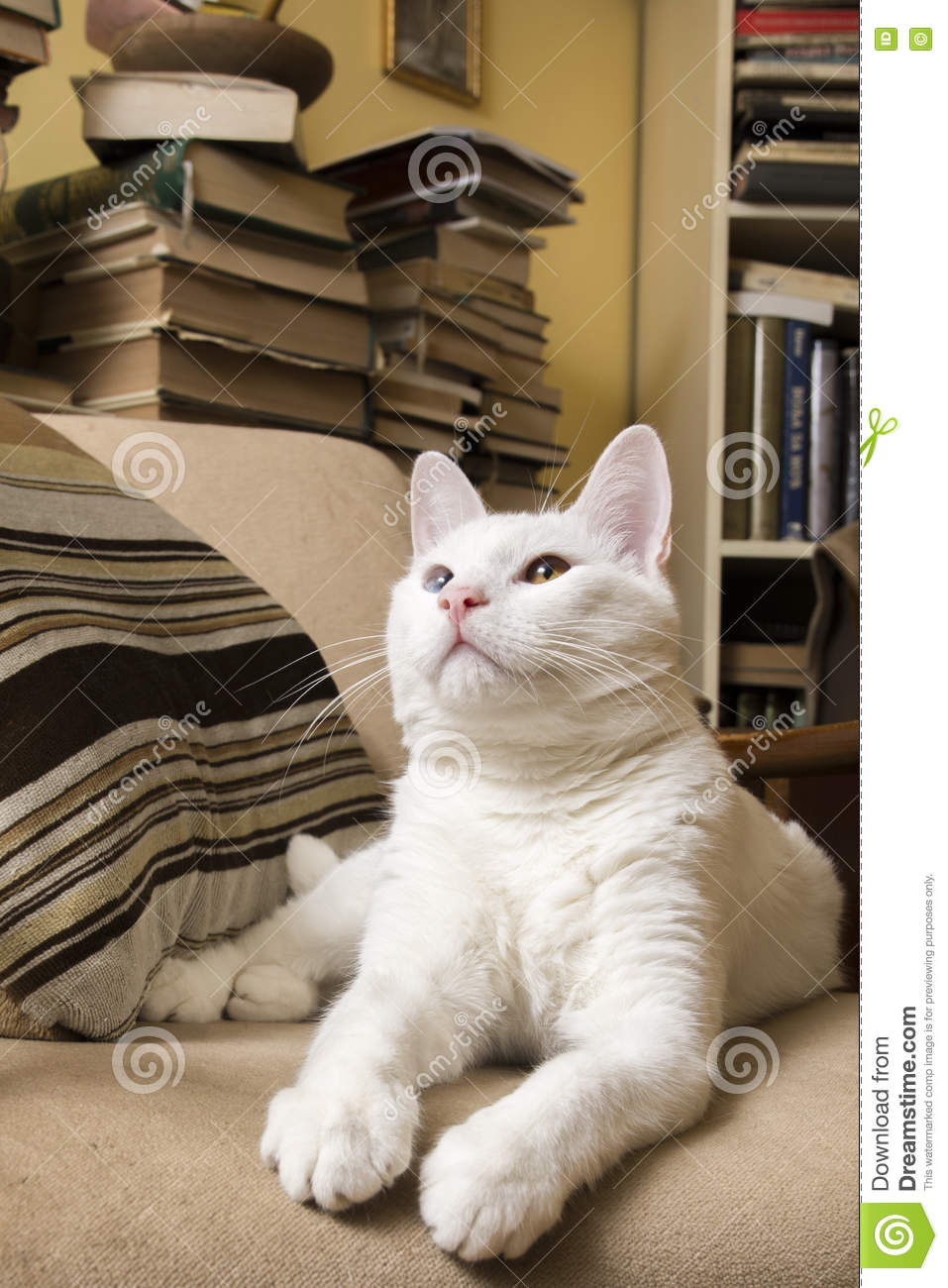 White cat lying in the armchair