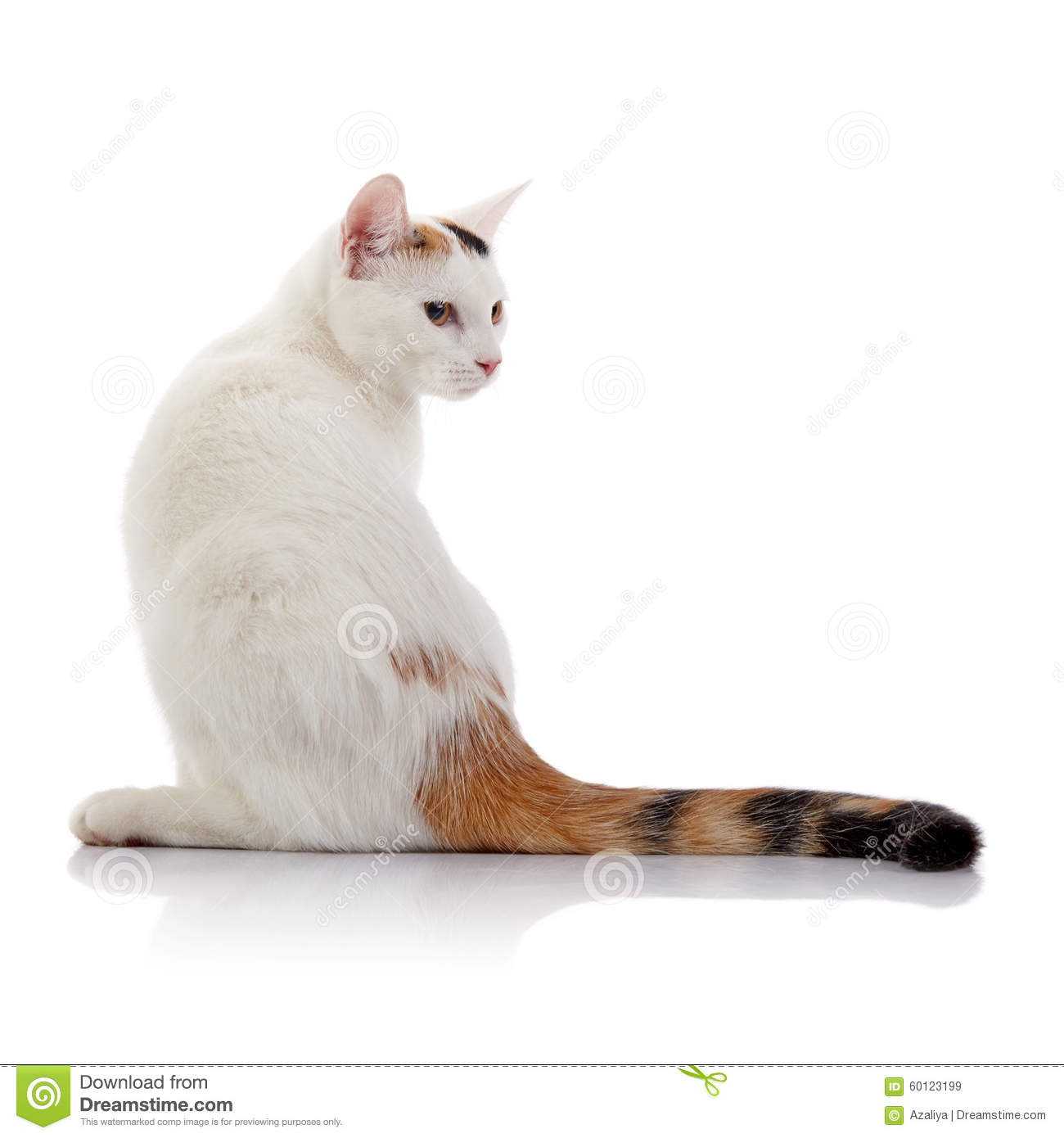 Cat With Striped Tail