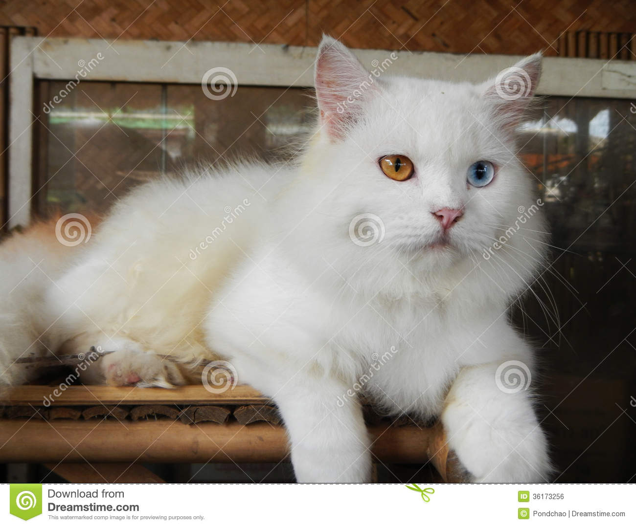 nice cat A list of cute cat names for girl cats find the perfect name for your kitty by  searching our list of 1500+ names by category.