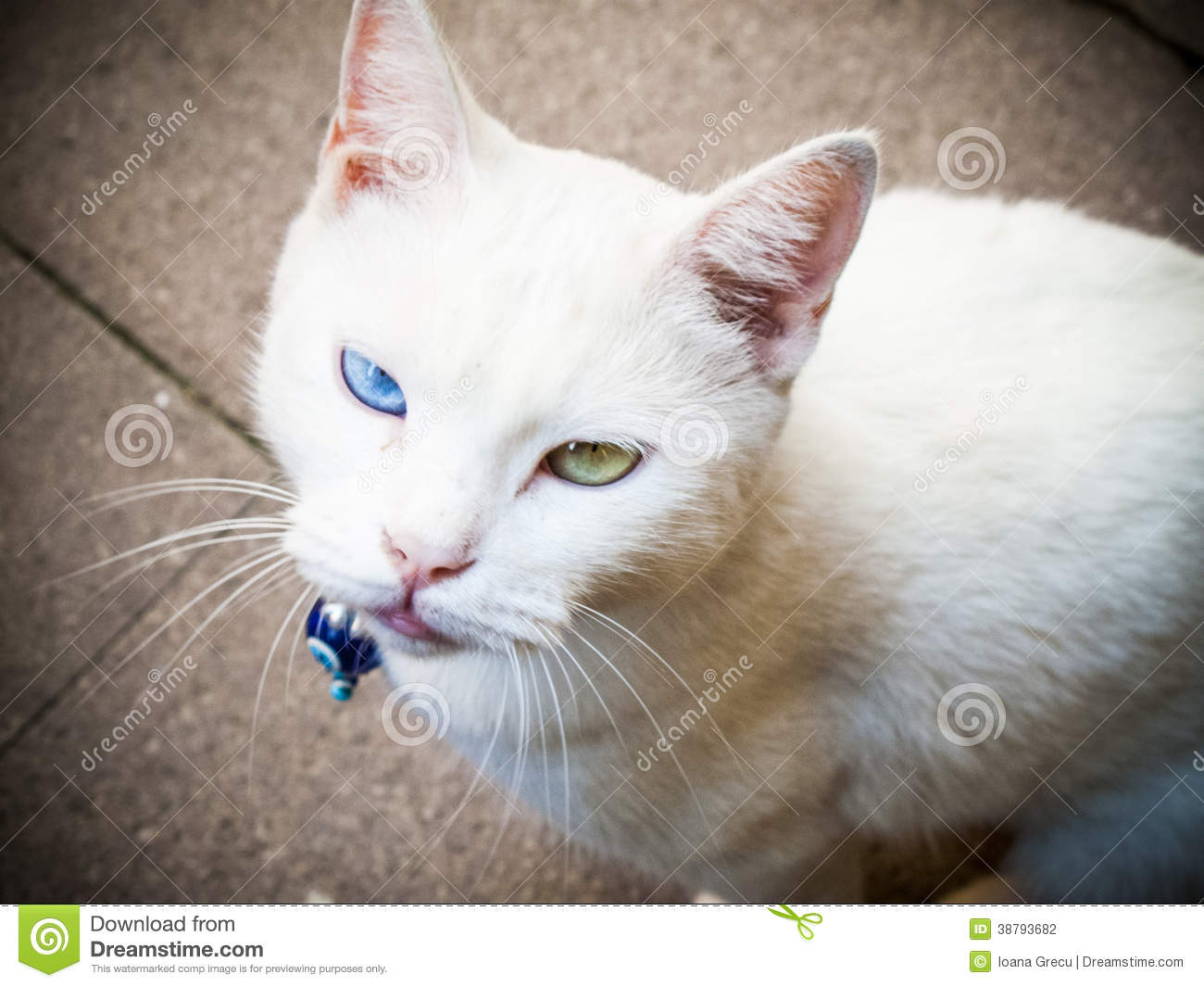 Cat With Green And Blue Eyed Calico