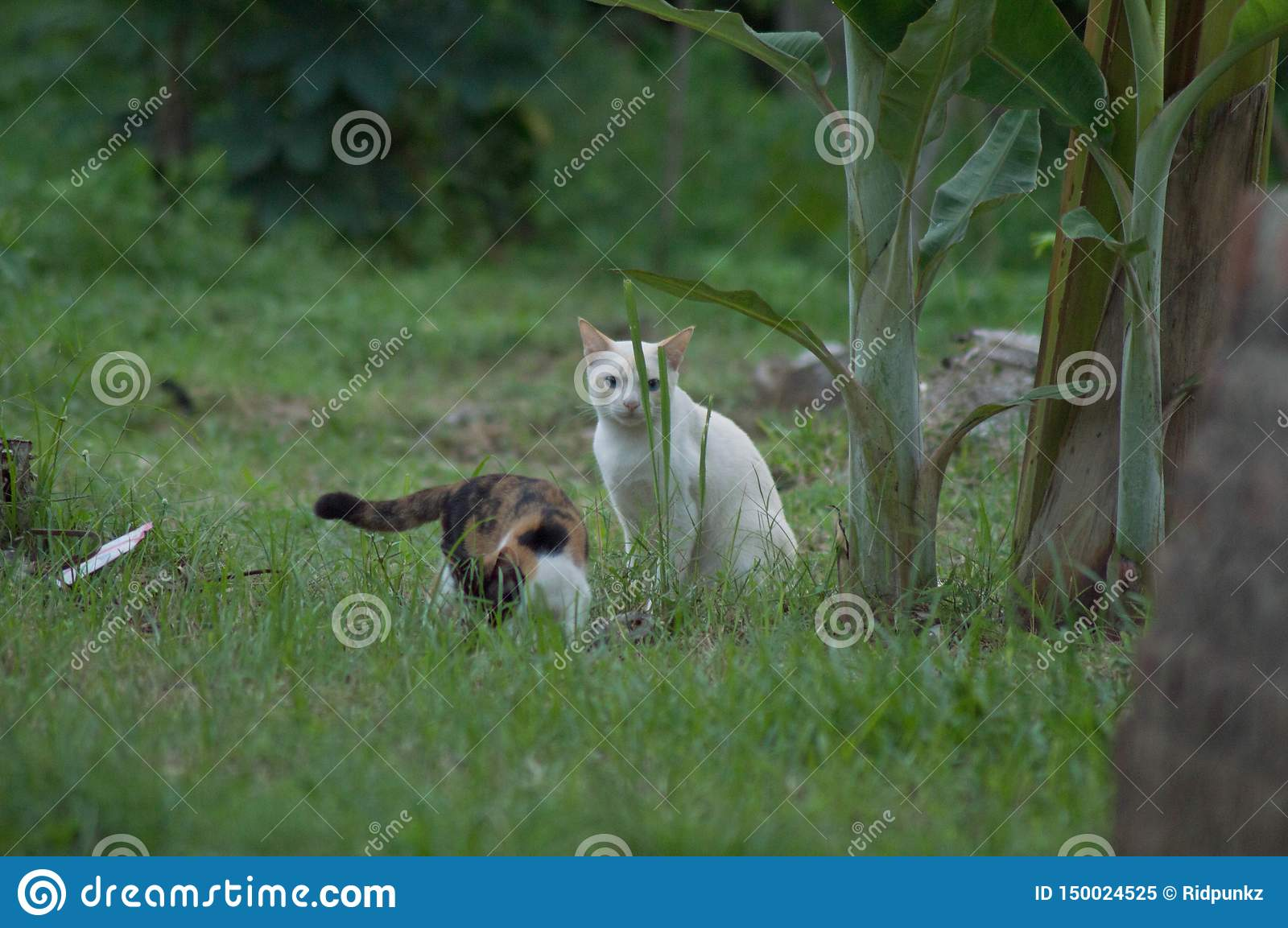 White cat playing around with another in the grasses