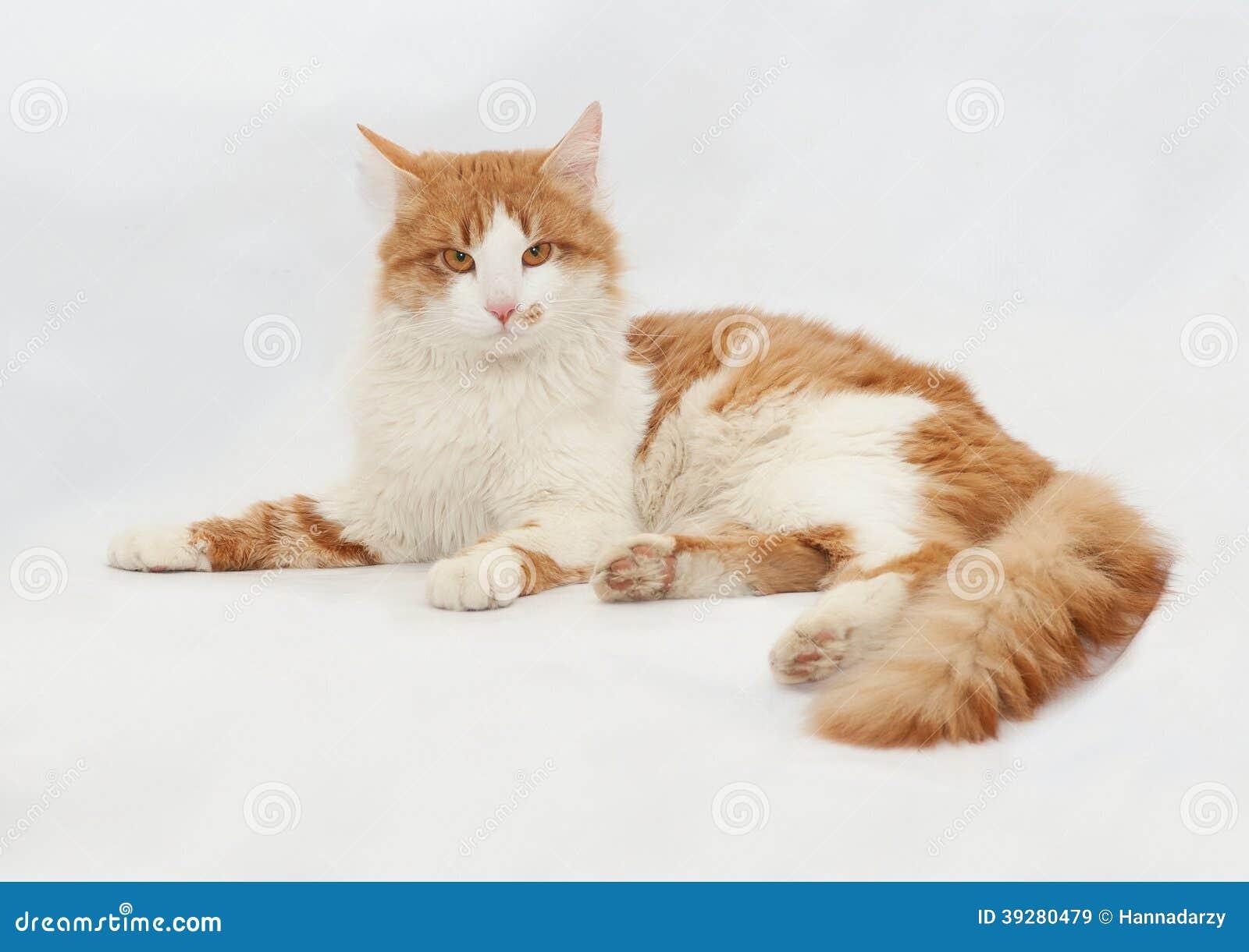 Cat Ears Red Spots