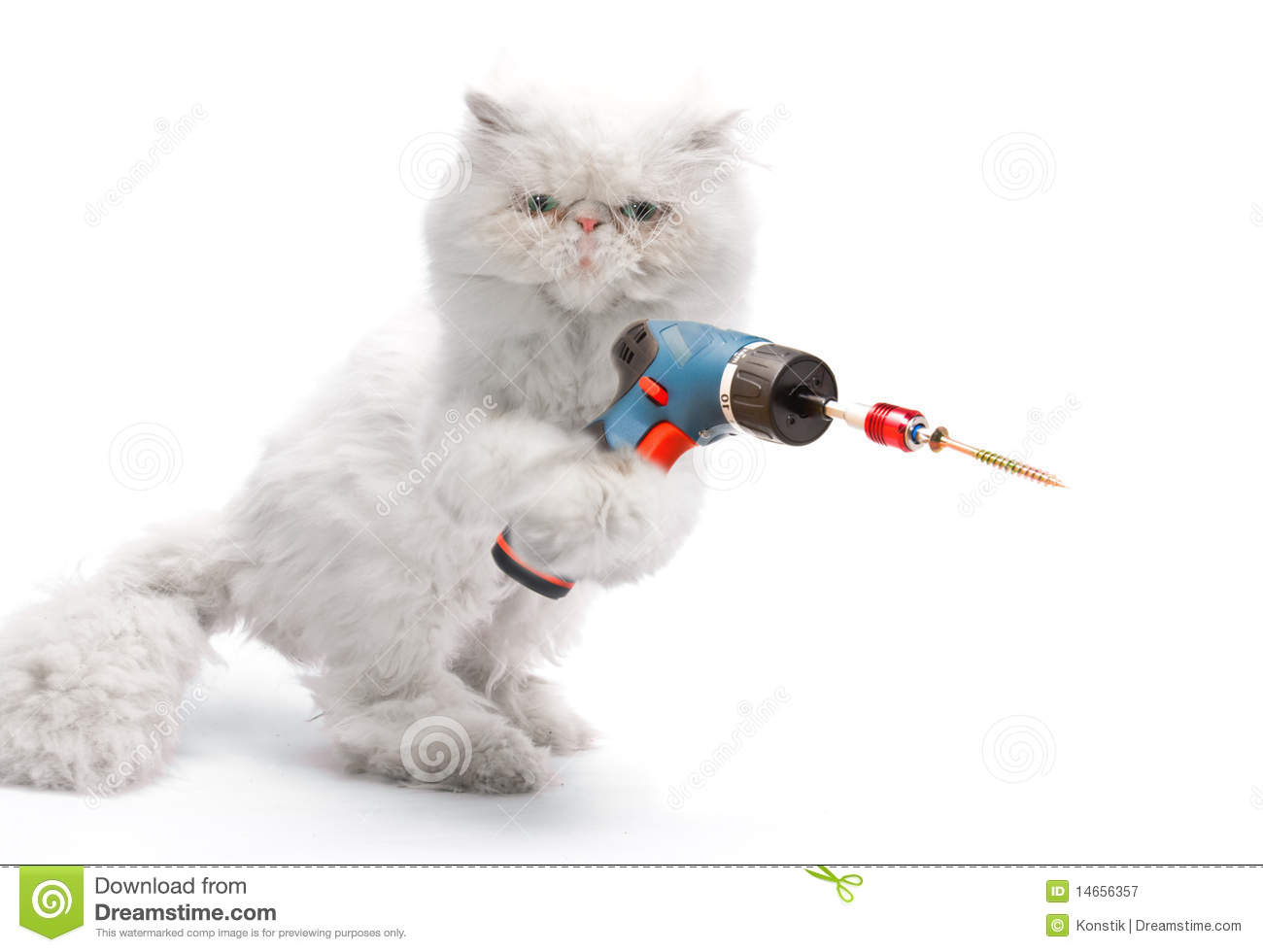 White cat with screwdriver