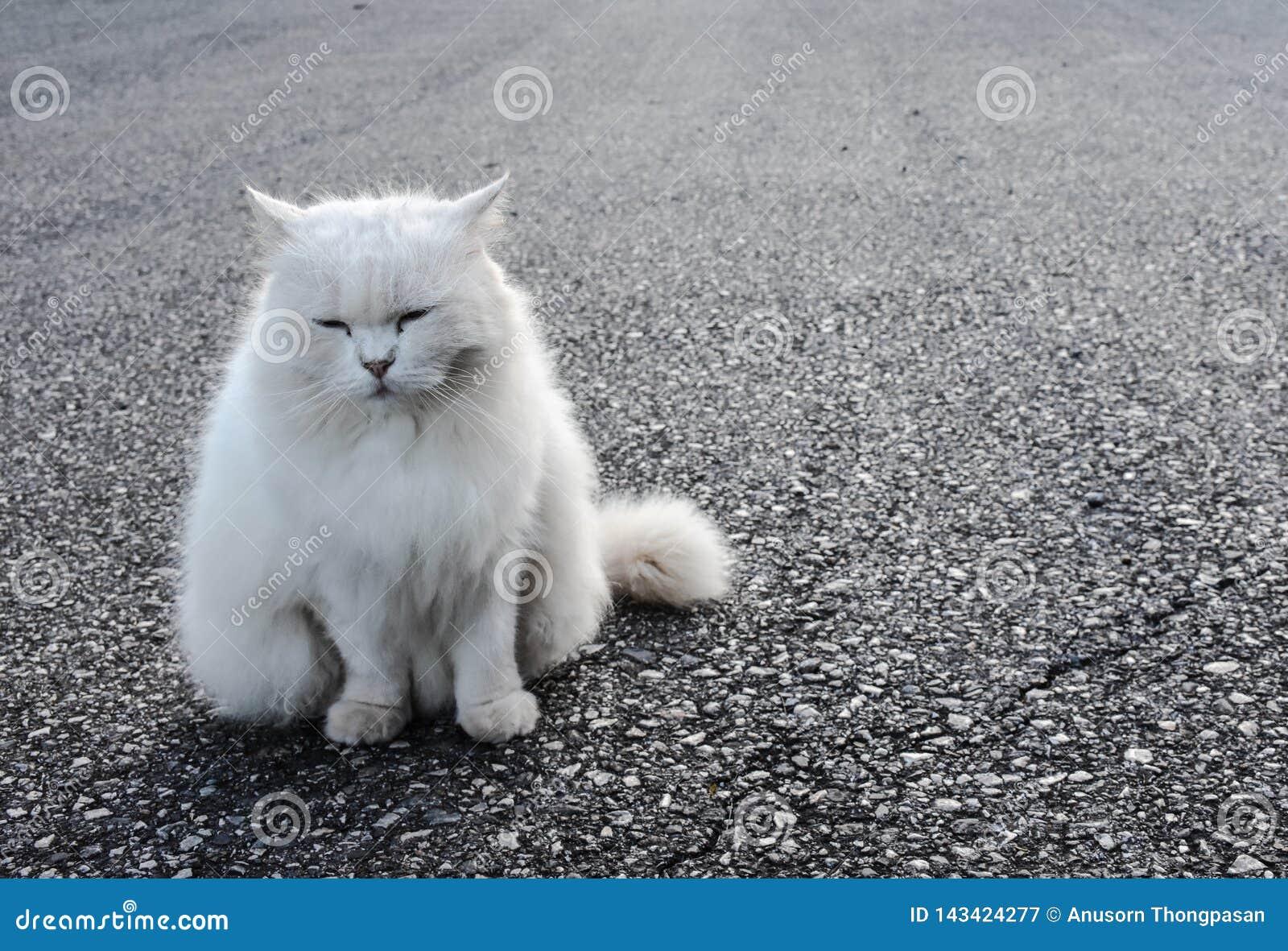 The white cat is sitting looking straight ahead.,defocus,spot focus