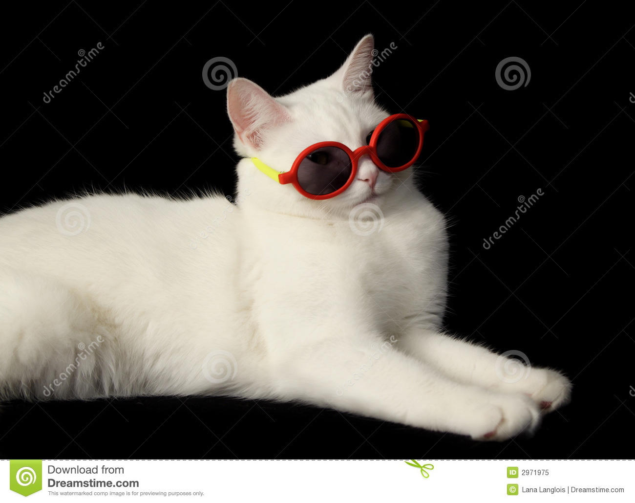 White Cat With Sunglasses Royalty Free Stock Photo - Image: 2971975