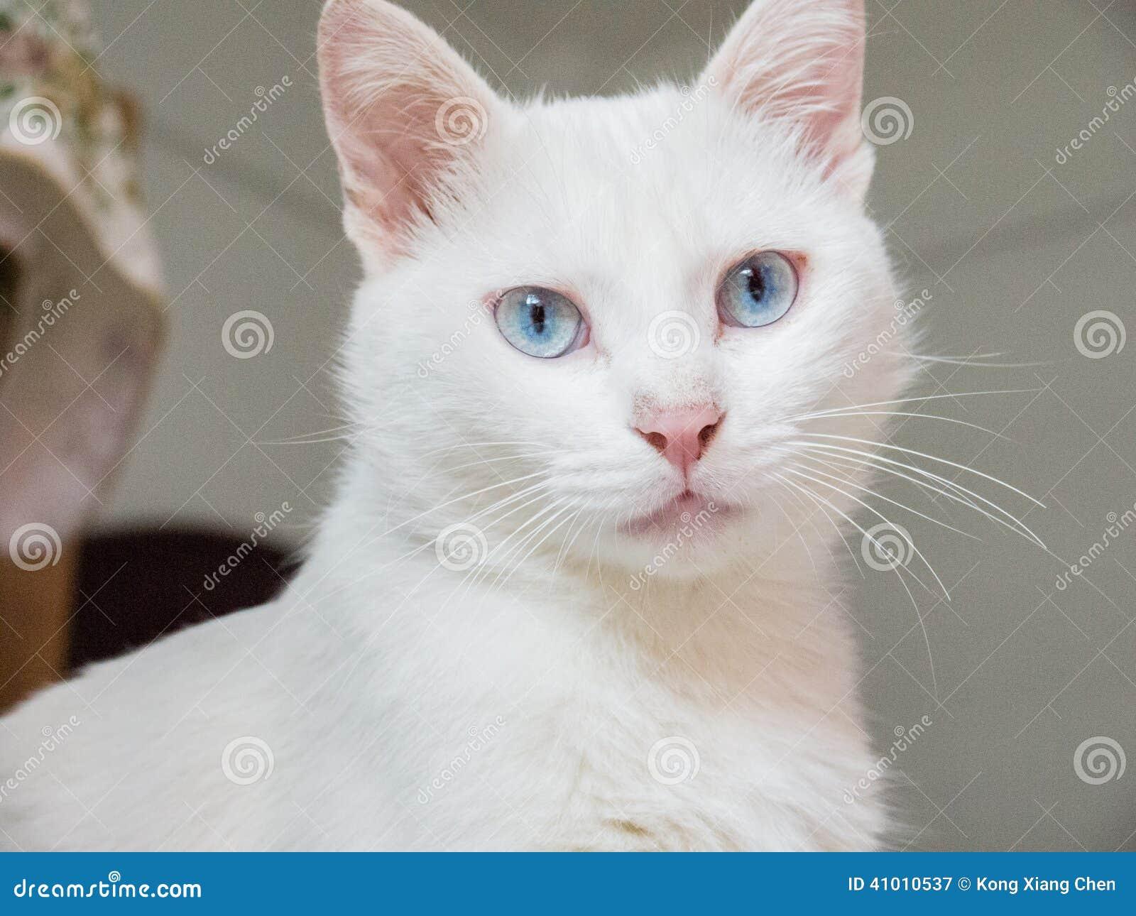 scientific name of cat