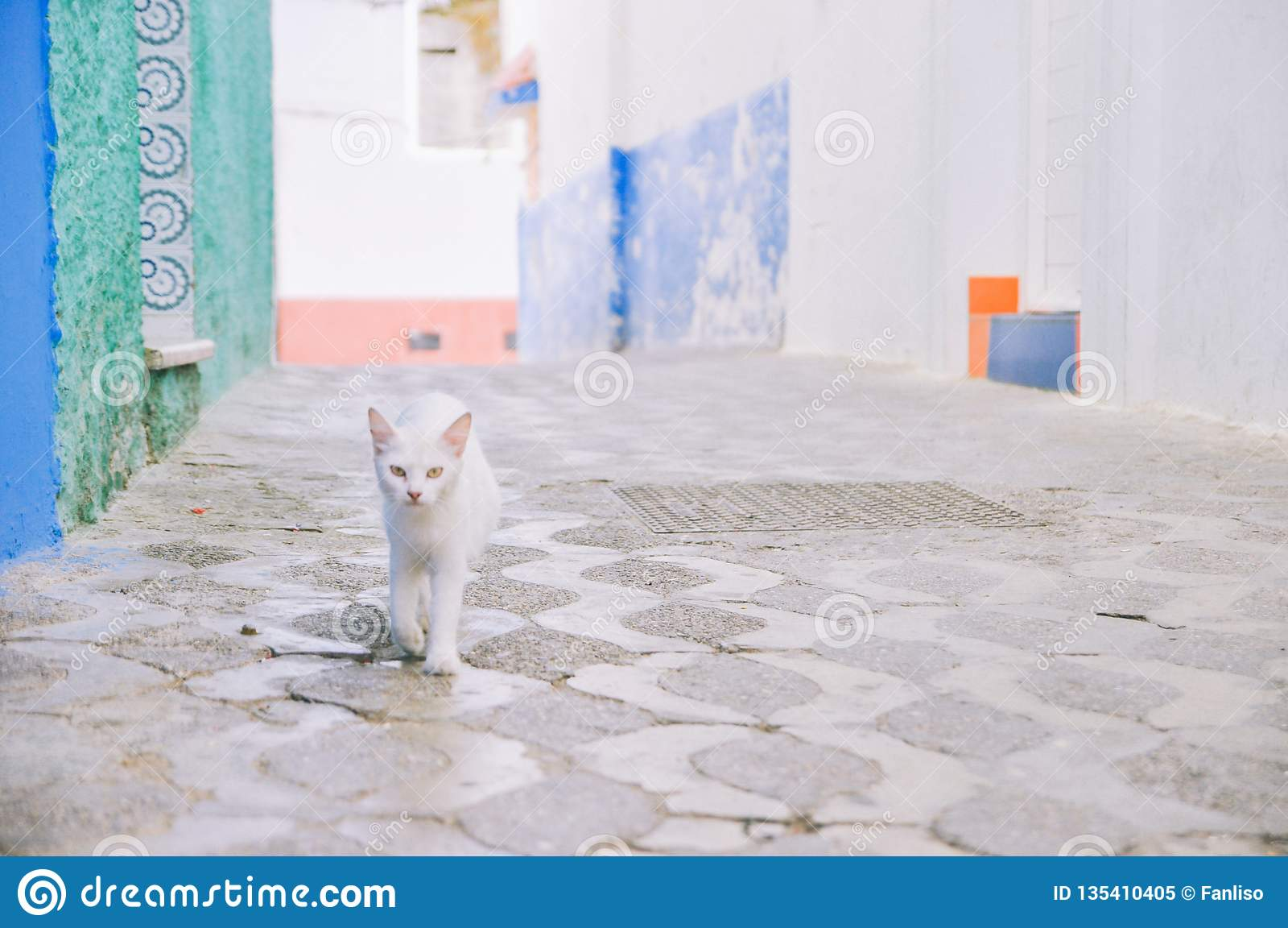 A white cat walks on alley