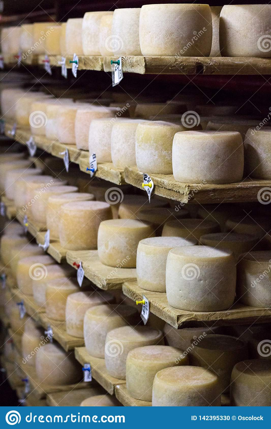 White cheese heads growing ripe on shelves of dairy food production house