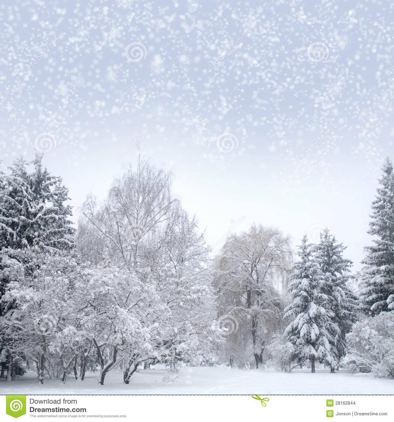 White Christmas Forest With Snow Stock Images Image
