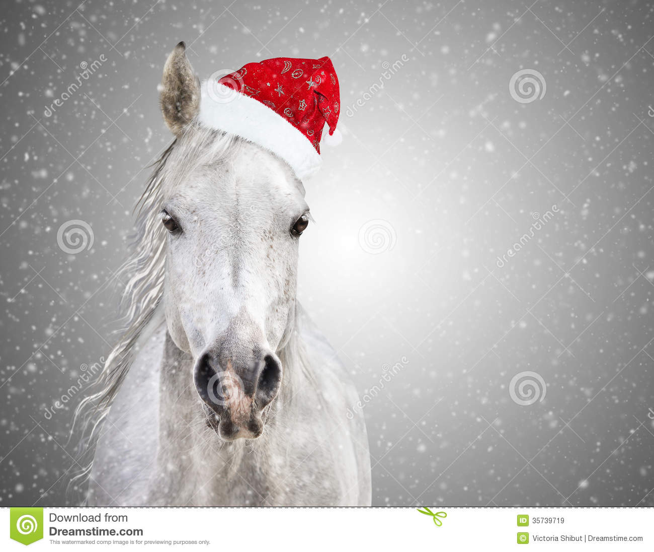 Christmas Horse.White Christmas Horse With Santa Hat On Gray Background