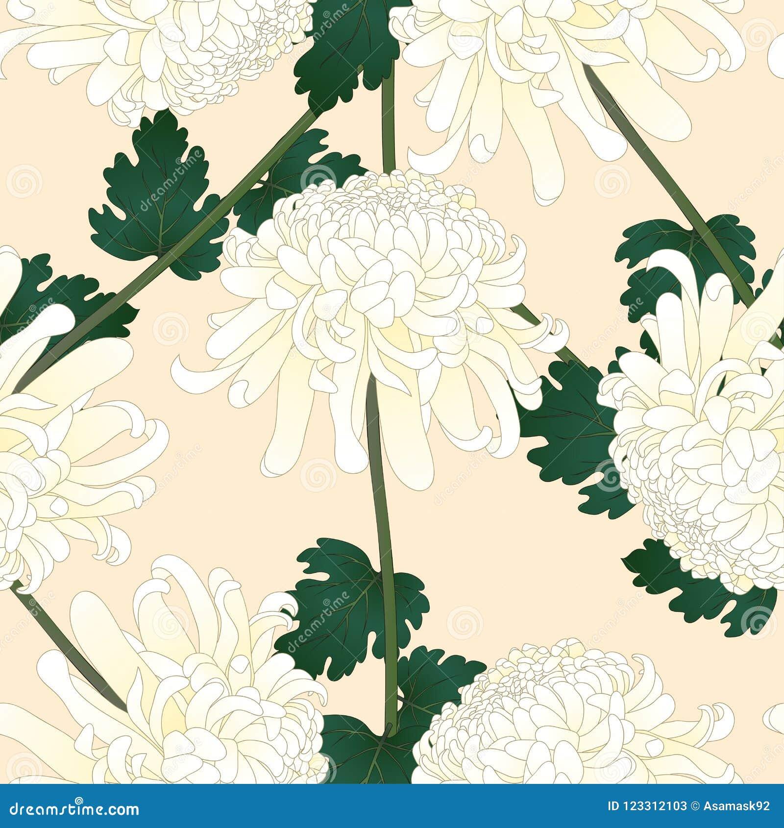 White Chrysanthemum Kiku Japanese Flower On Beige Ivory Background
