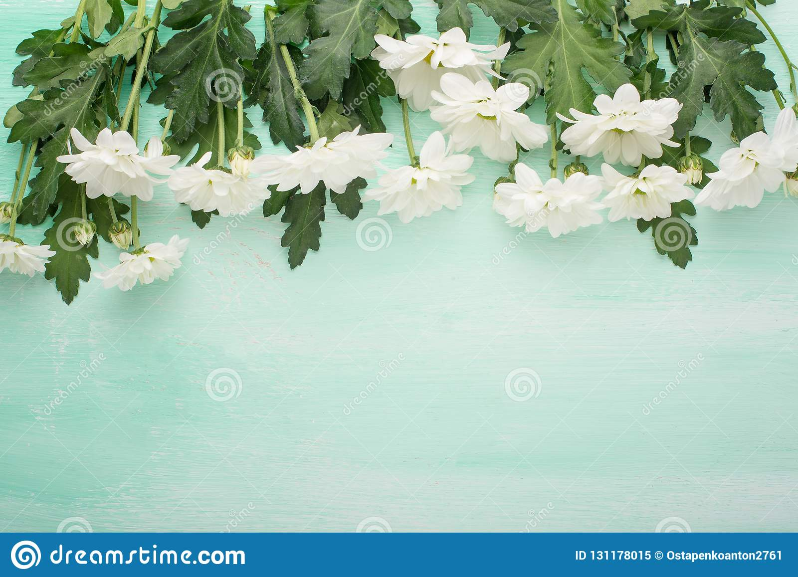 White chrysanthemums on a wooden background, top view, with empty space for writing or advertising