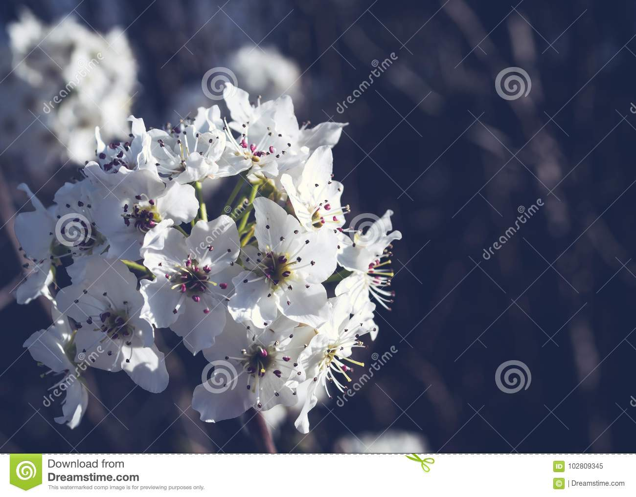 White Cluster For Flowers Stock Image Image Of Agriculture 102809345