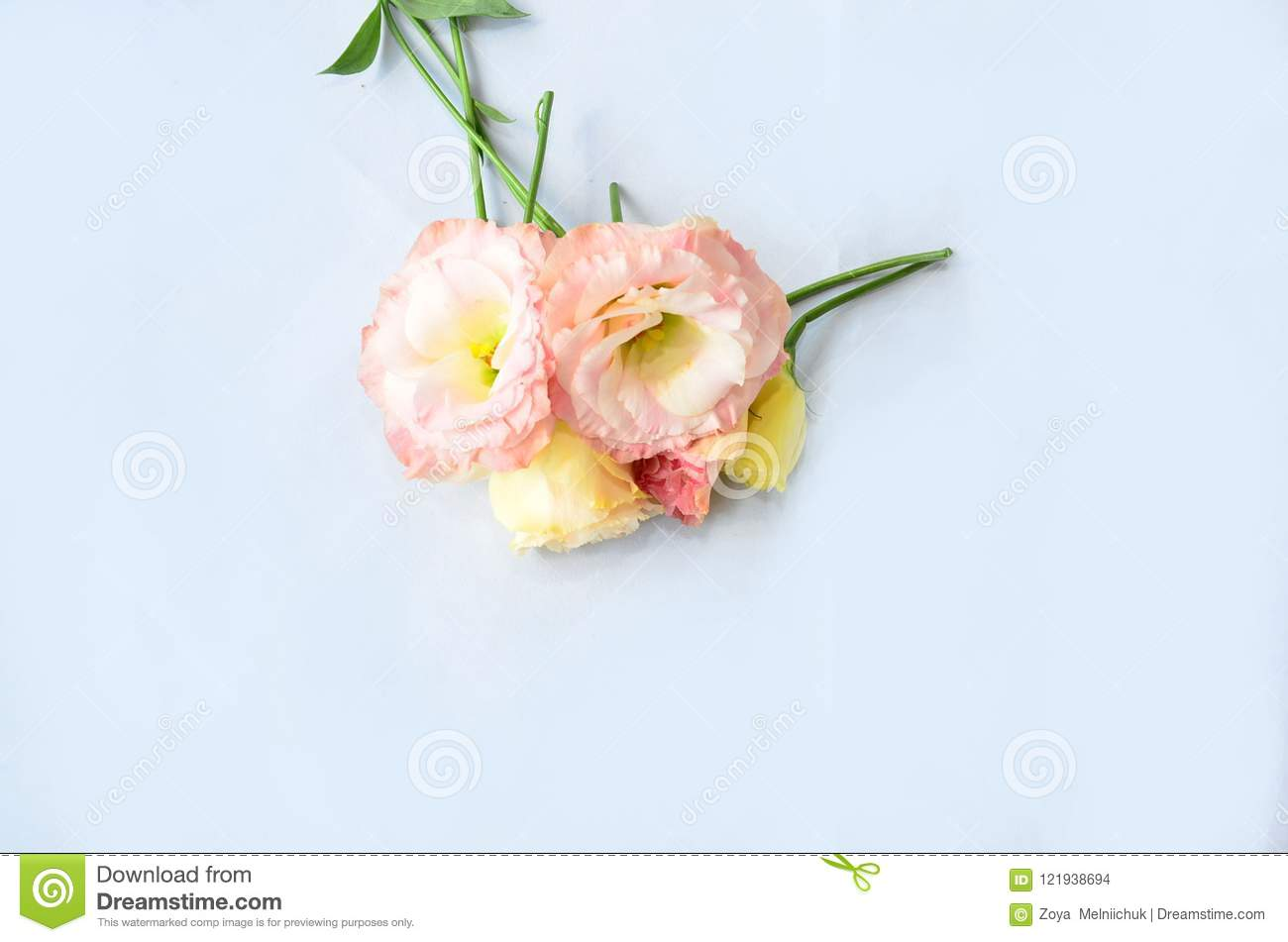 White And Colored Flowers On A White Background For Your Text Stock