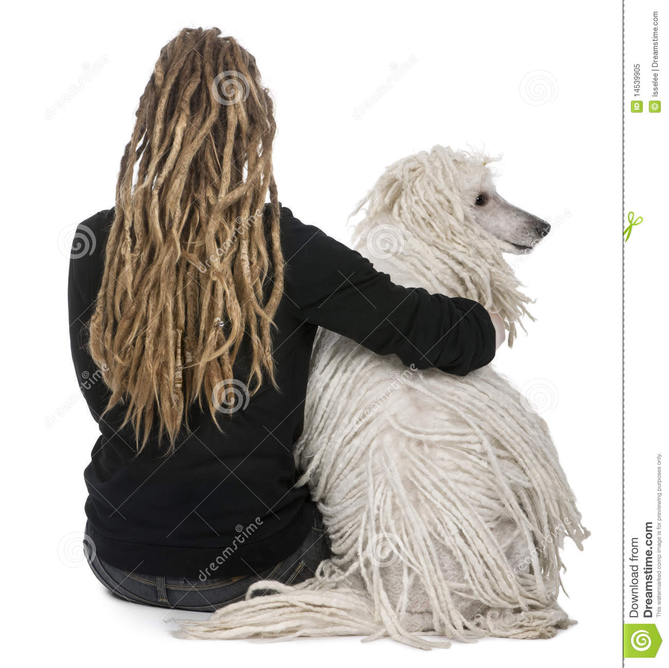 White Corded standard Poodle and a girl