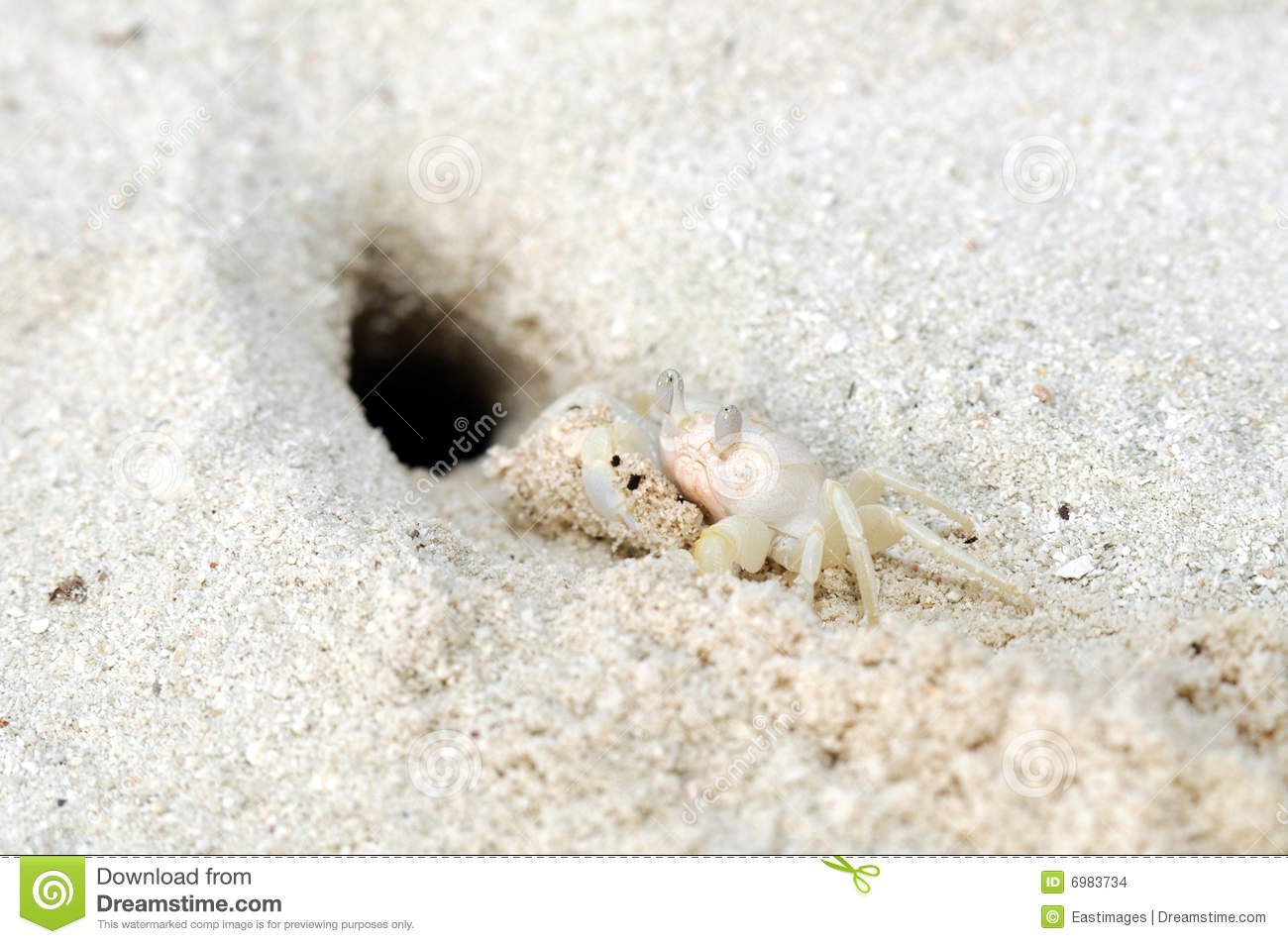 White Crab On The Sliver Sand Stock Photo - Image: 6983734