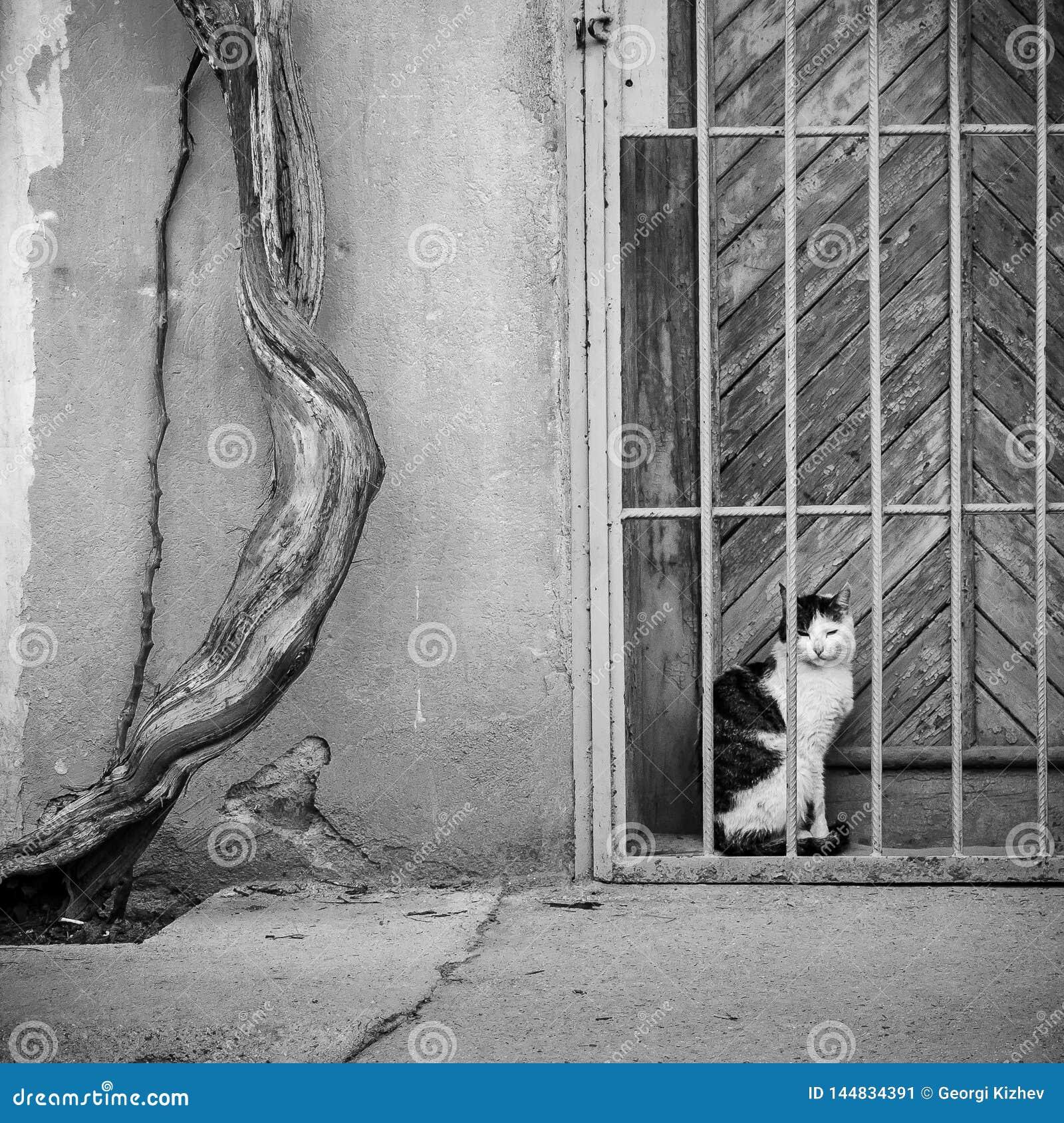 White czarnego kota