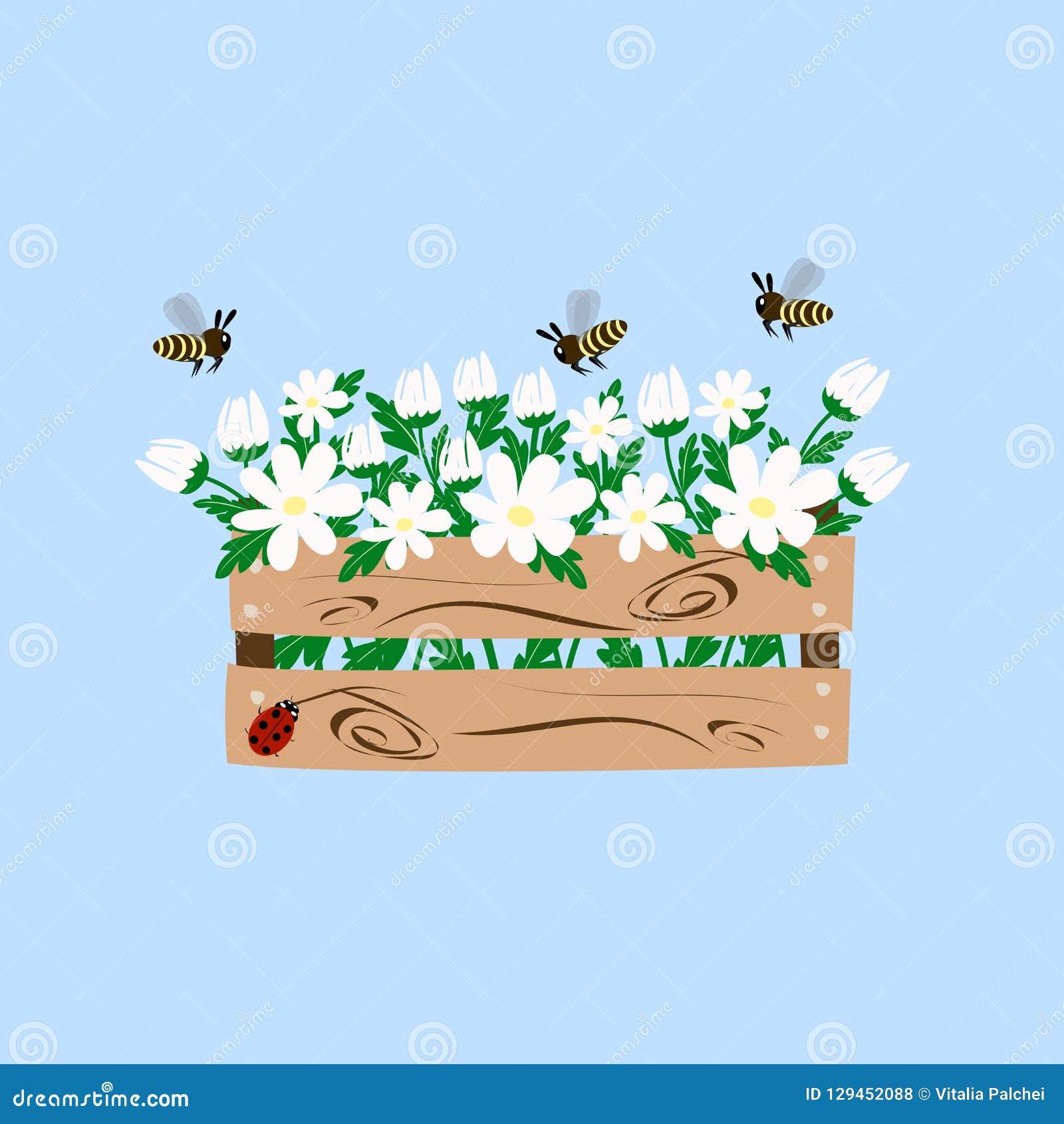 White daisy in the box