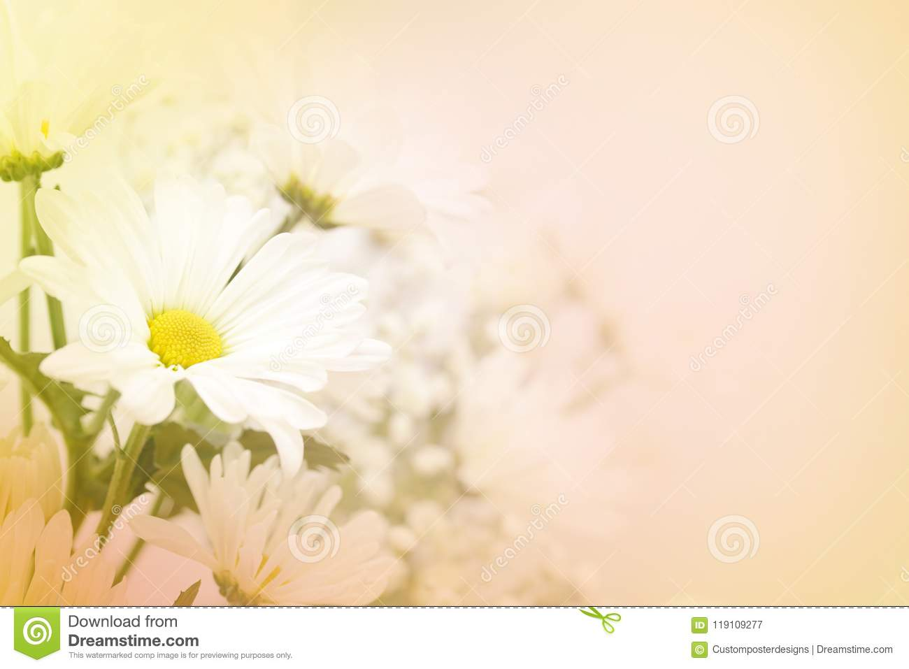 Download A White Daisy Flower On A Blurred Peach Background. Stock Image - Image of condolences, cheerful: 119109277