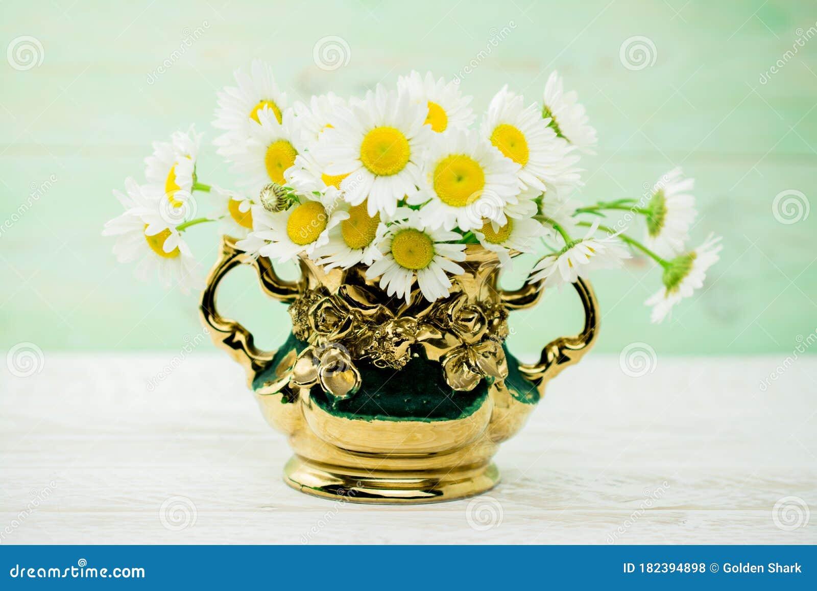 White daisy flower in vase stock photo. Image of blank ...