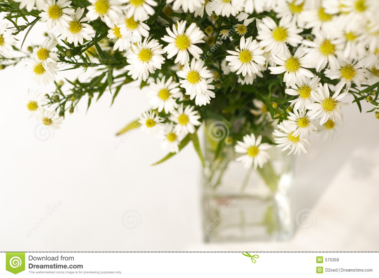 White daisy in a vase stock image image of florist holiday 575359 white daisy in a vase reviewsmspy