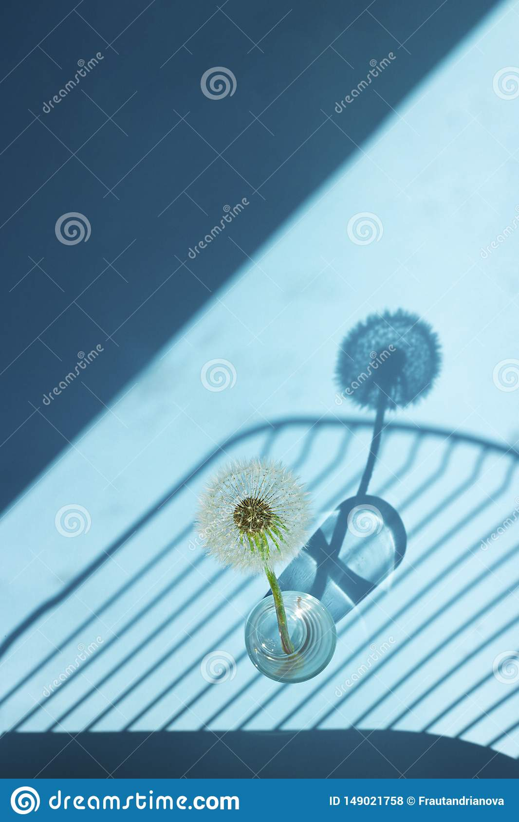 White Dandelion in small glass in bright light with lines of shadows on blue background. Creative contemporary pop art. Vertical